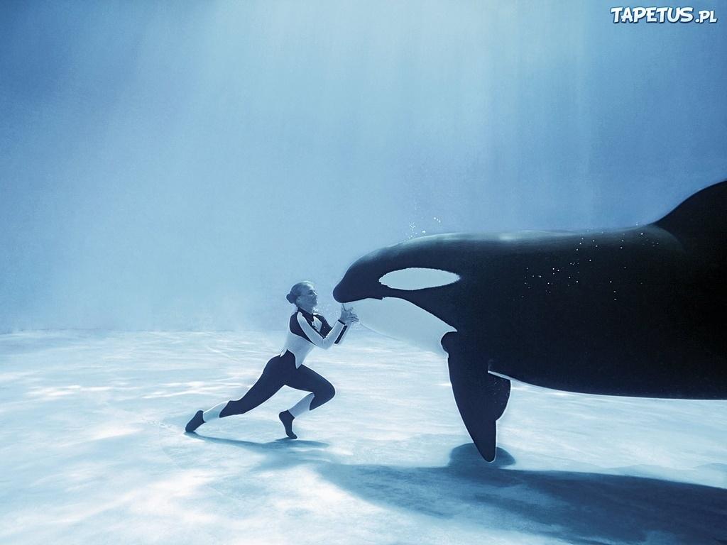 Orka treserka for Sfondilandia mare