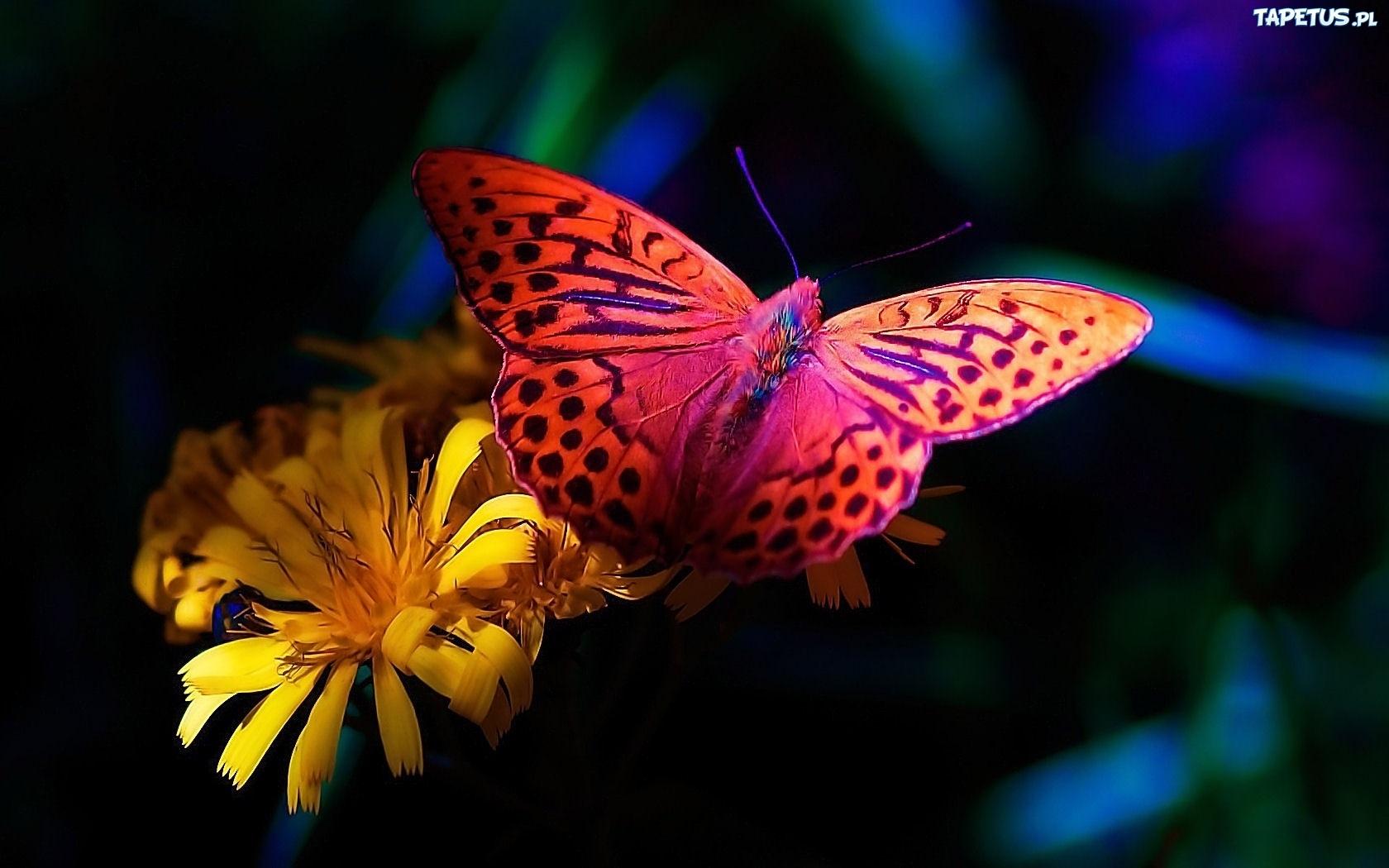Motyl kolorowy kwiat - Home screen full hd wallpaper ...