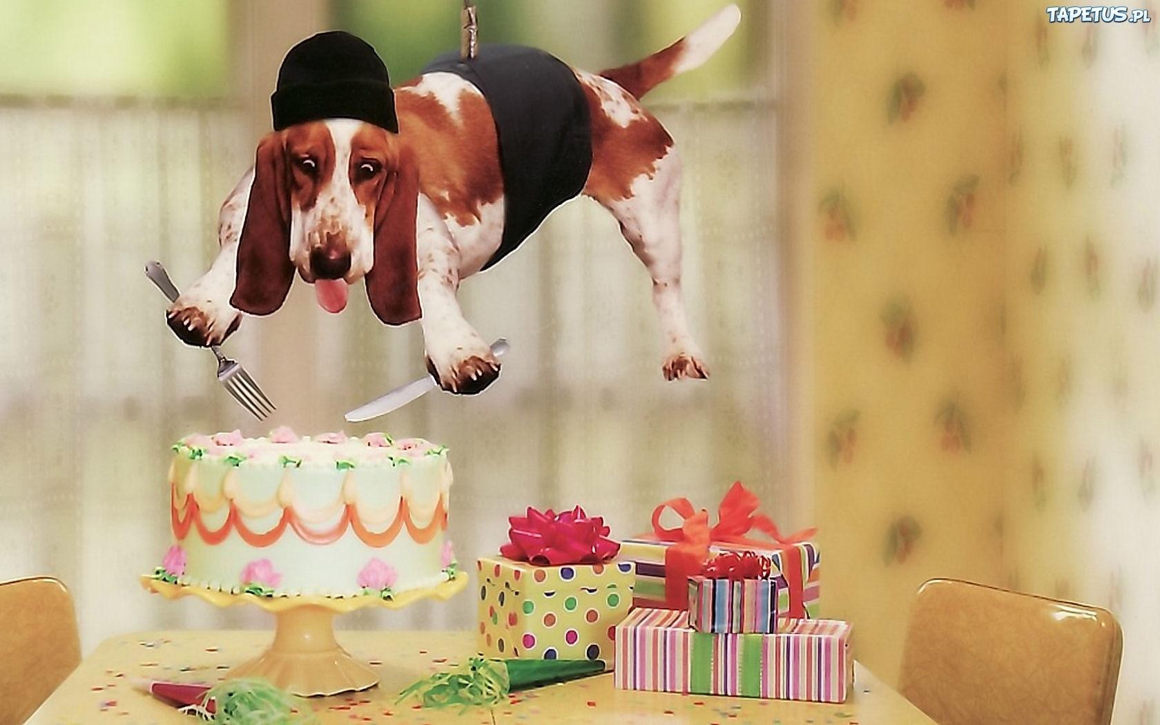 Смешной позитивное поздравление на день рождения