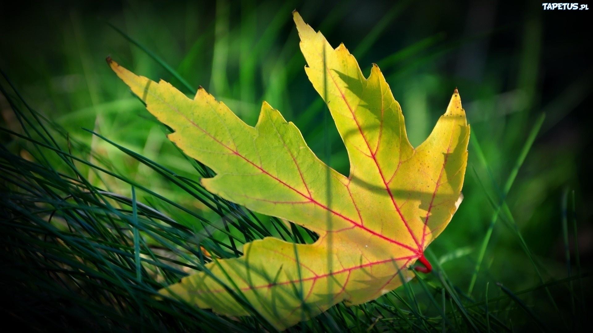 девушка трава листья  № 63138  скачать