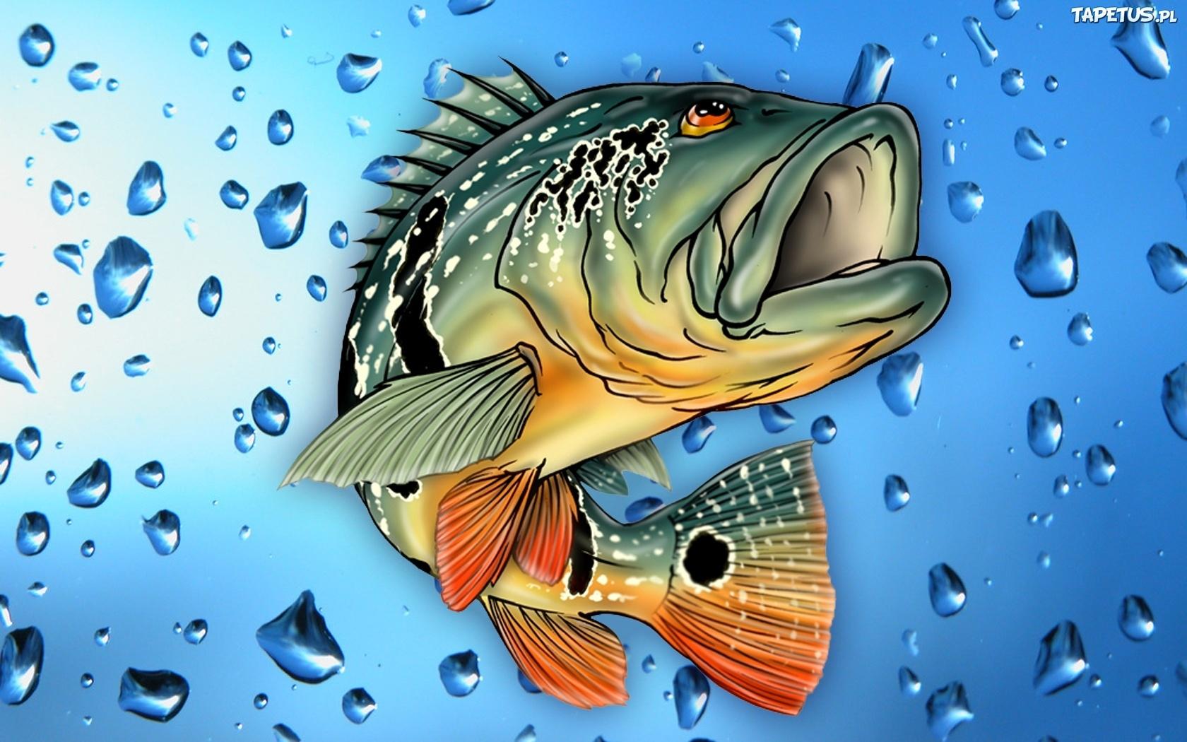 жена картинки с рыбами в хорошем качестве копался