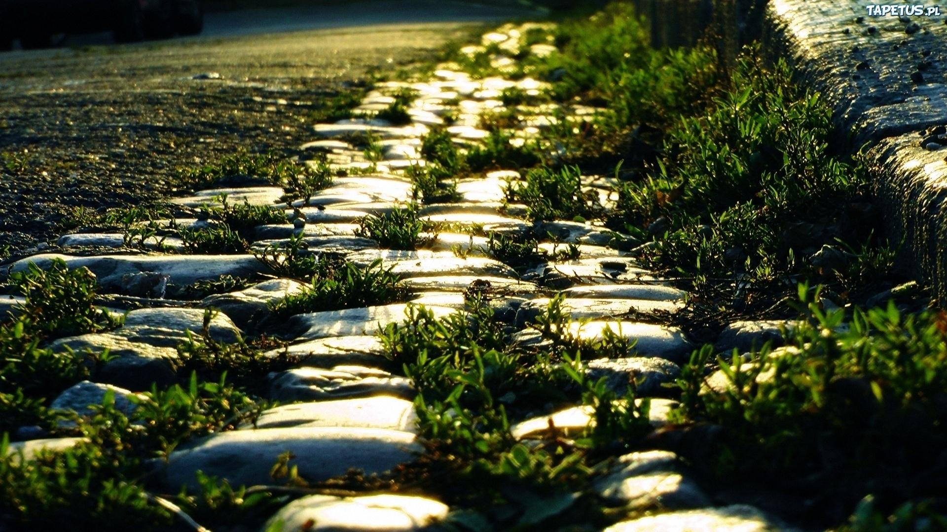 трава камни grass stones анонимно