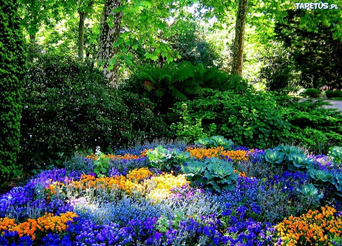 Ogród, Kwiaty, Drzewa, Krzewy