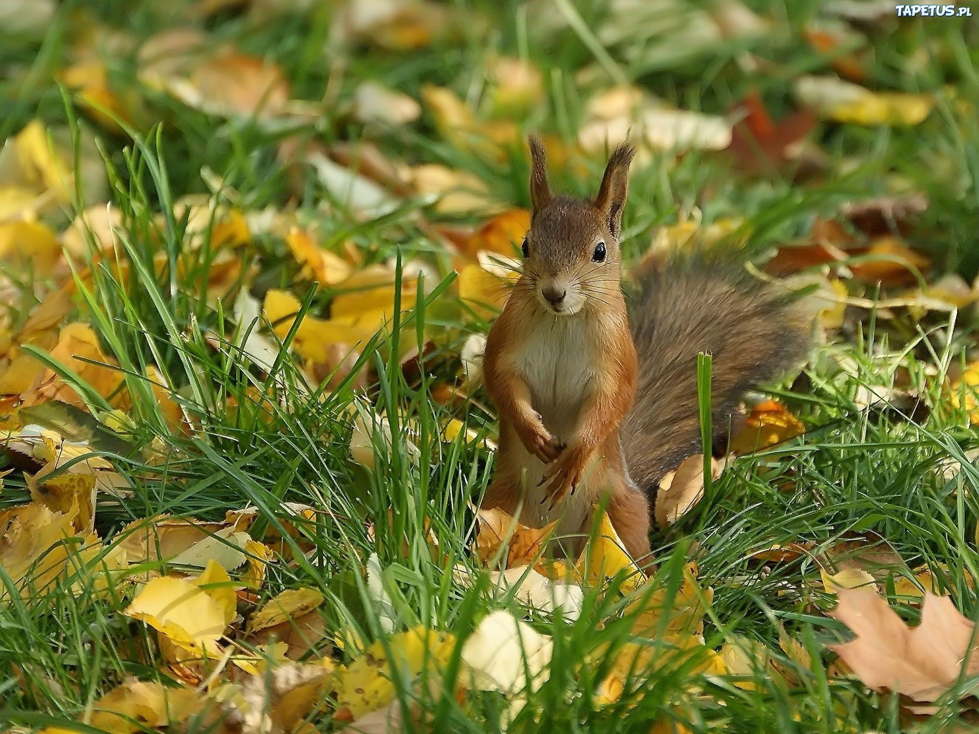 Картинки заяц мышь белка