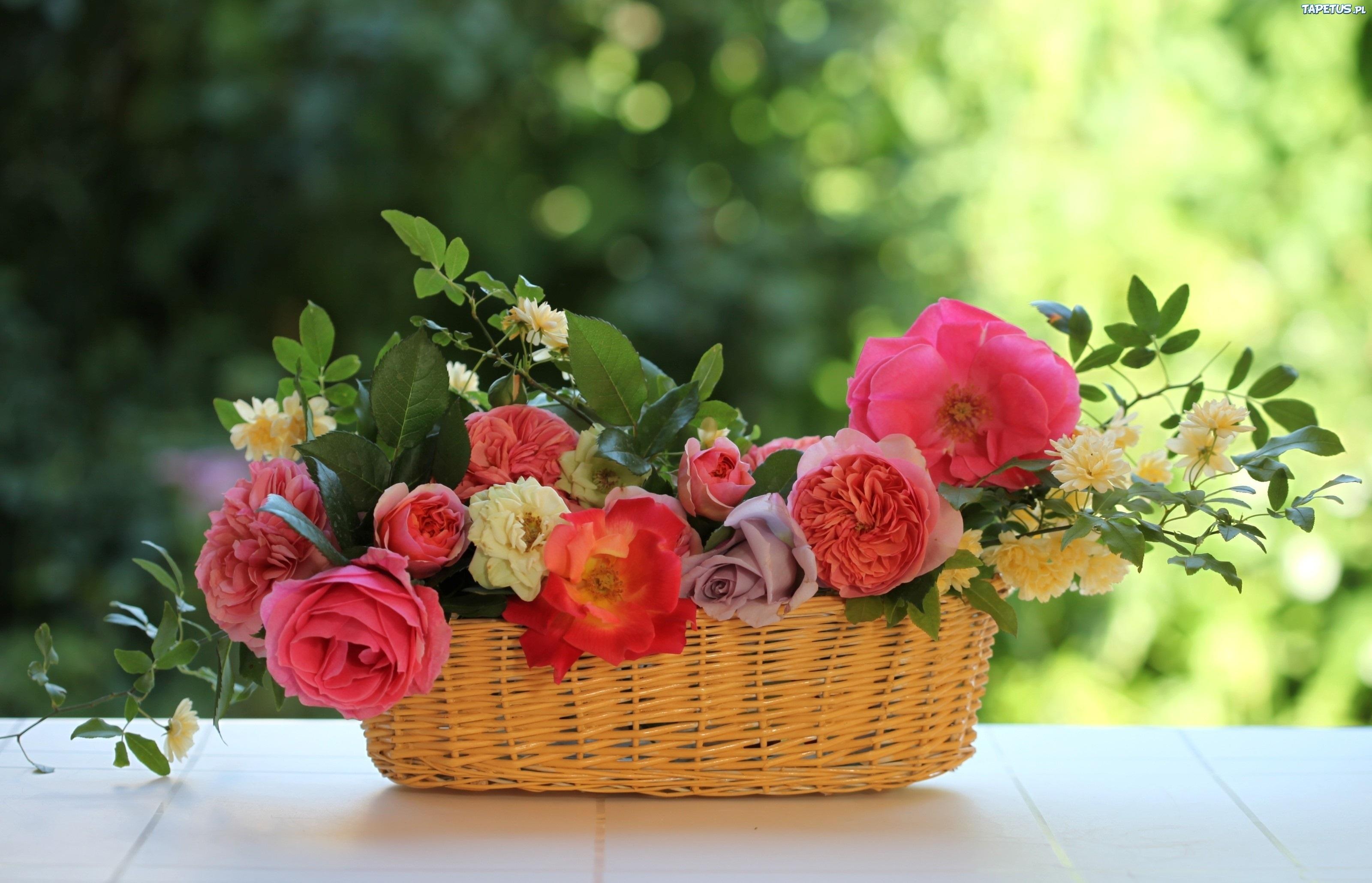 природа цветы корзина бесплатно
