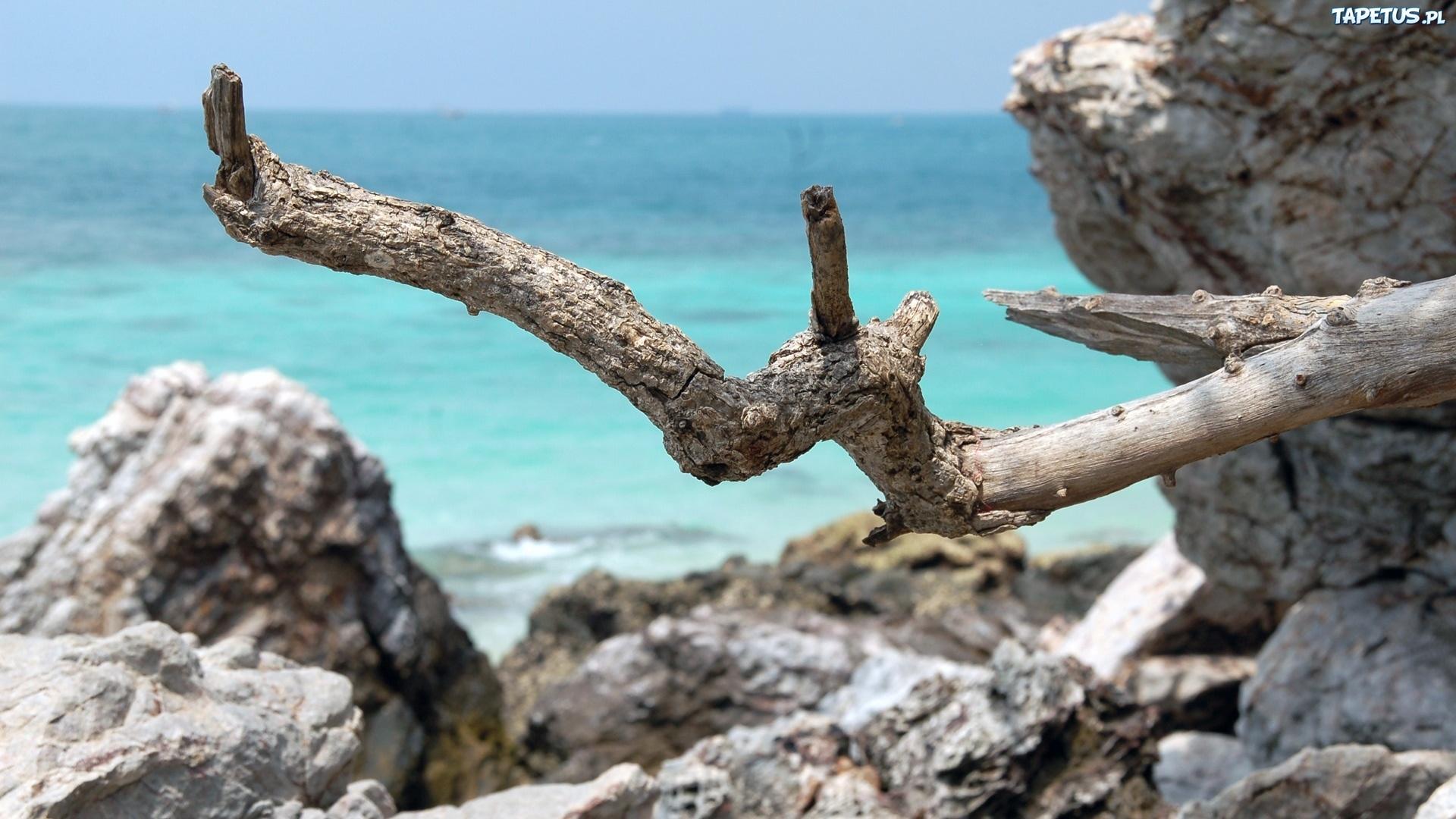 Сухое дерево на пляже без смс