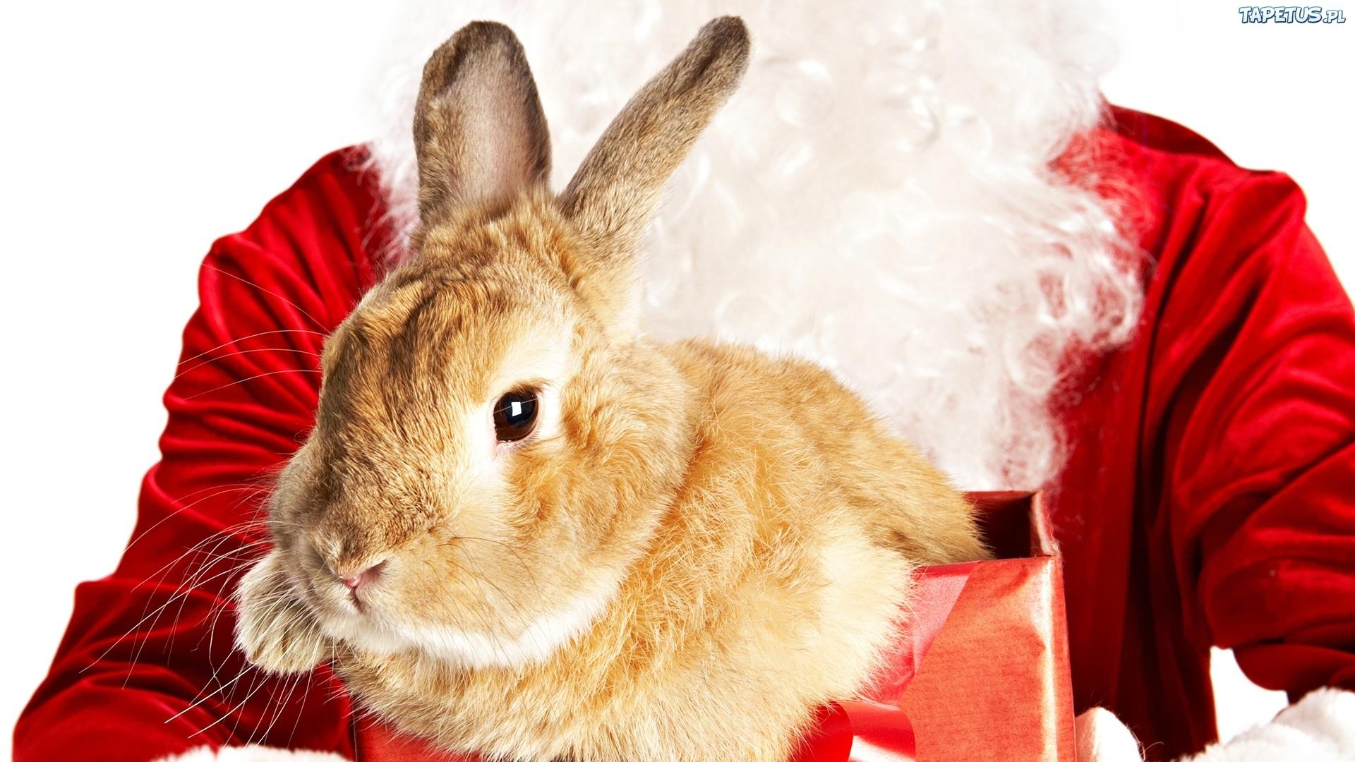 зайцы подарки новый год анонимно