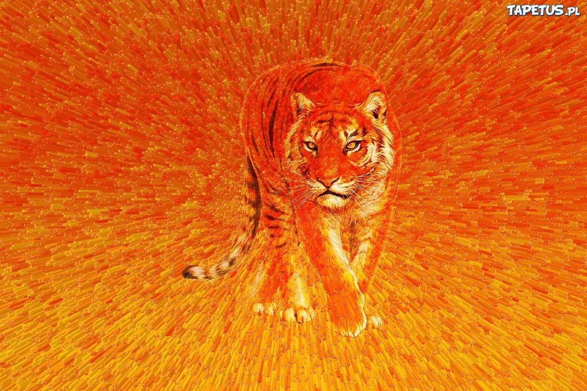 Tygrys 3d Kot Paski Pomarańcz