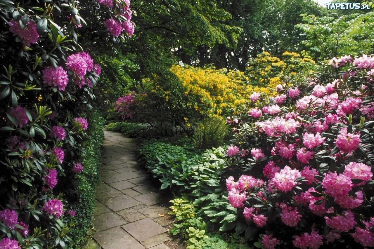 Ogród, Kwiaty, Krzewy, Drzewa, Dróżka