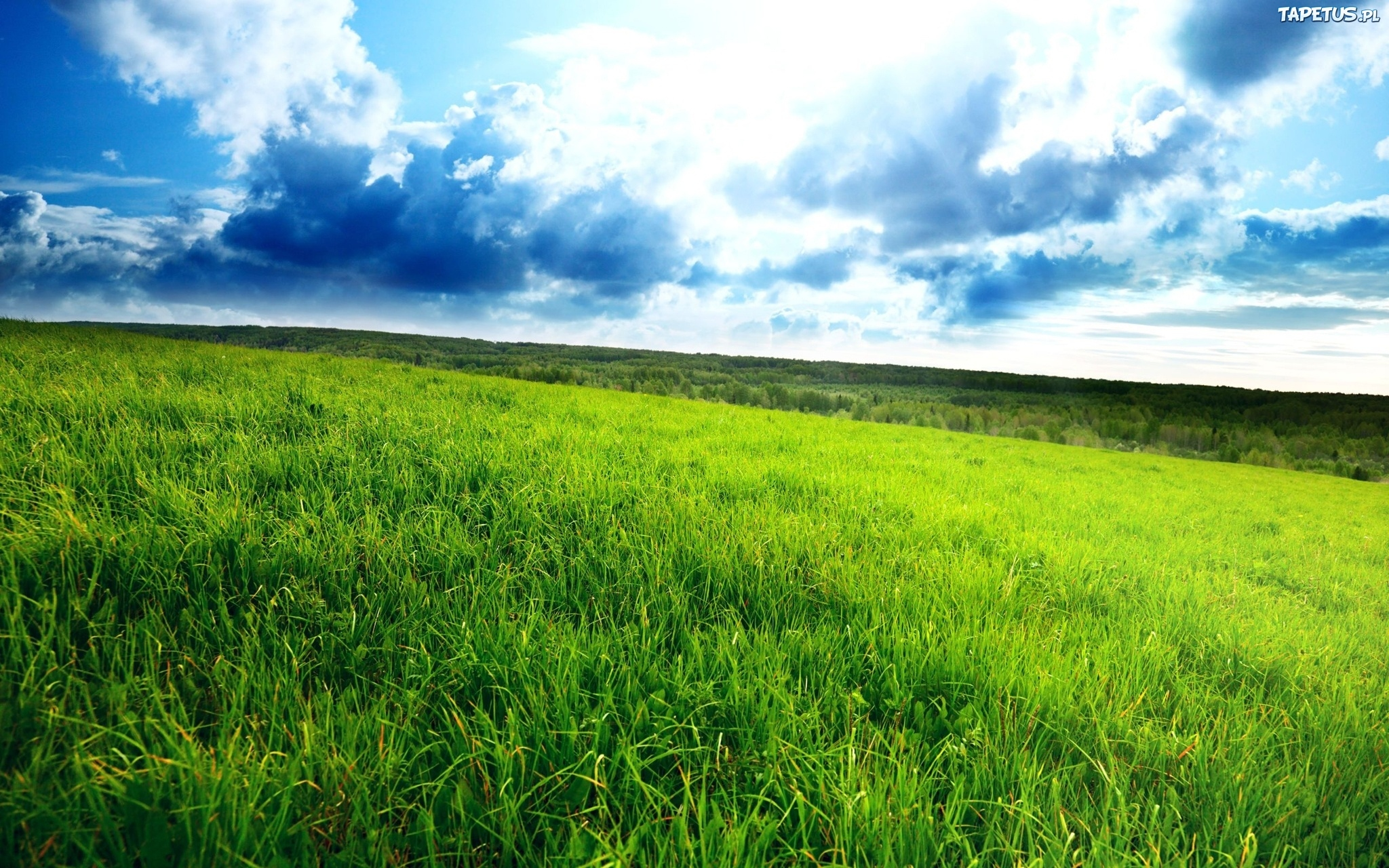 лужайка трава небо скачать
