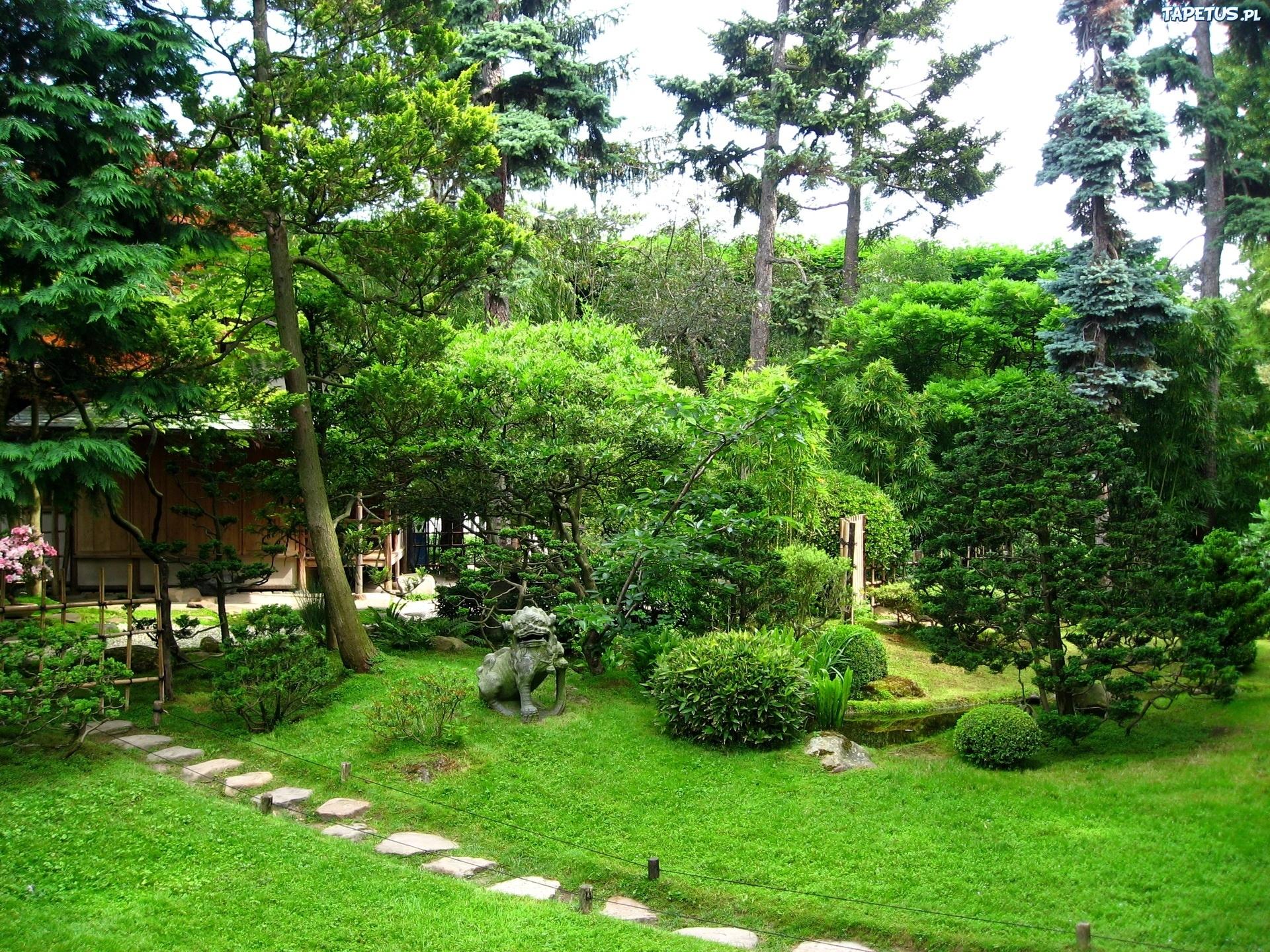 Ogród, Drzewa, Krzewy
