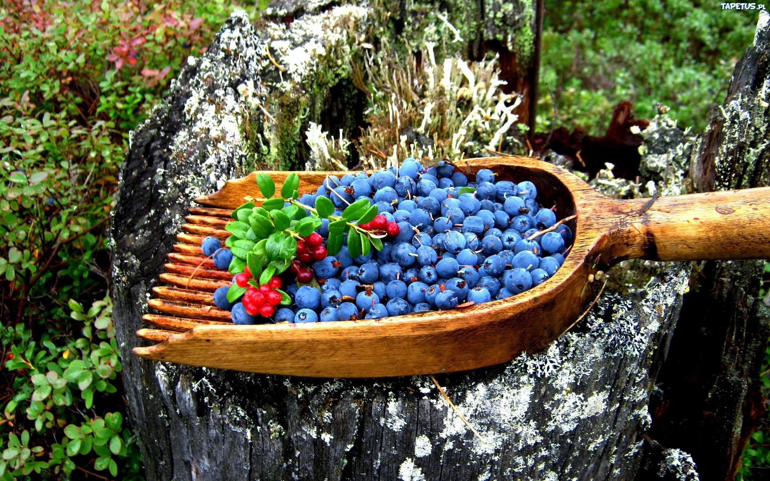 брусника ягода ведро бесплатно
