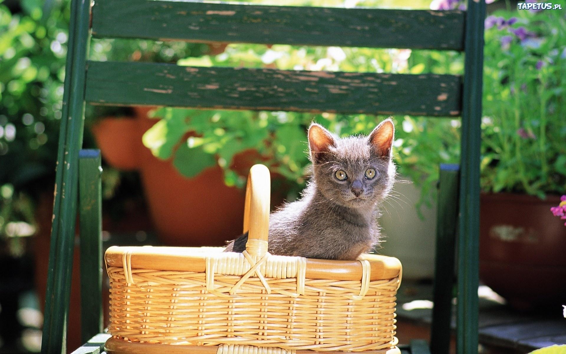 小黄猫  花盆里的小猫咪壁纸图片6  猫猫壁纸酷 wallcoocom