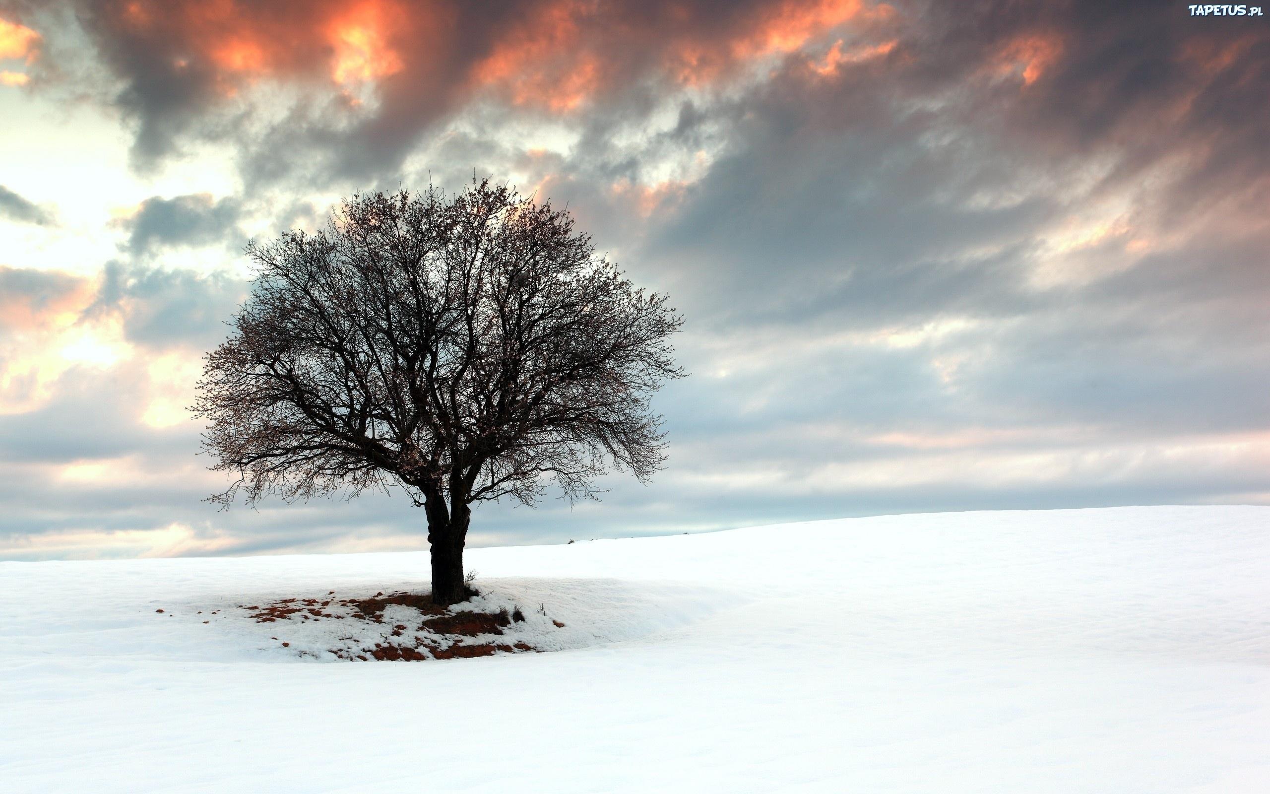 Снег деревья поле скачать