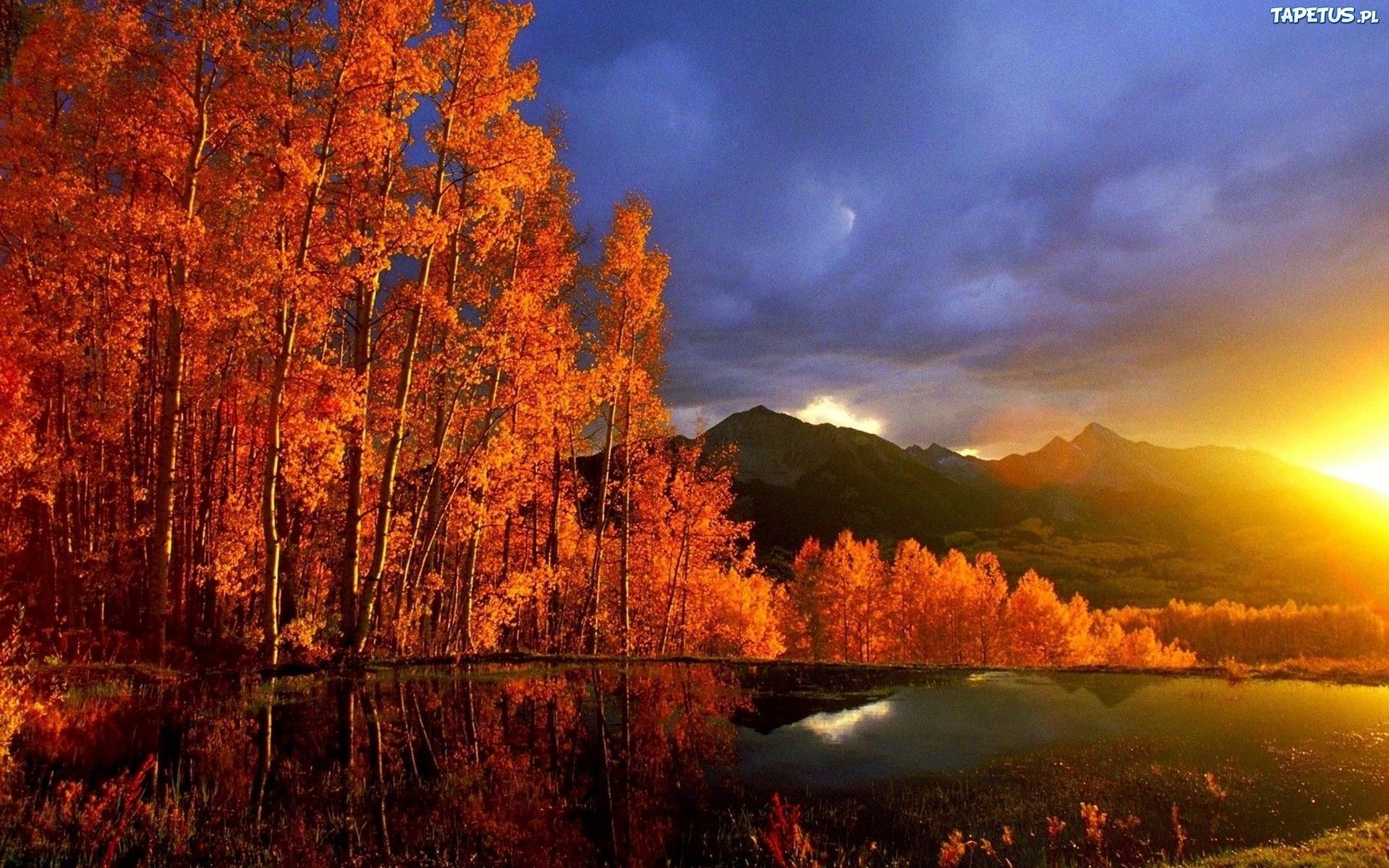 природа солнце озеро отражение деревья скачать