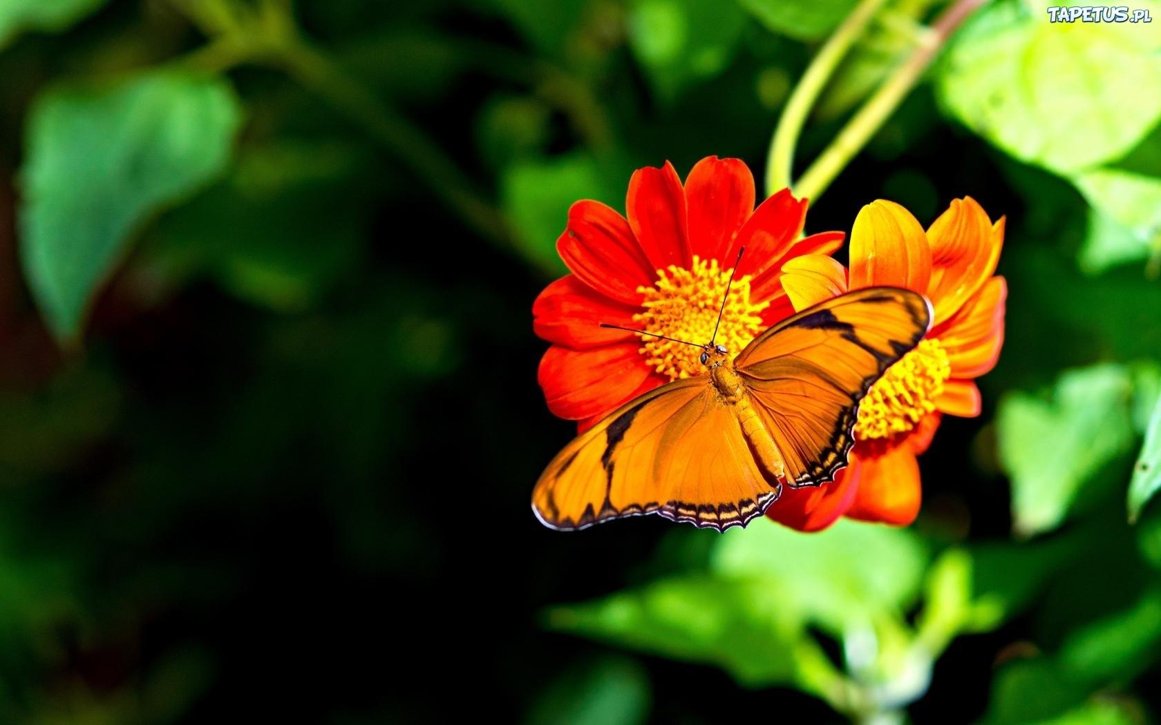 Желтая бабочка на оранжевых стеблях загрузить