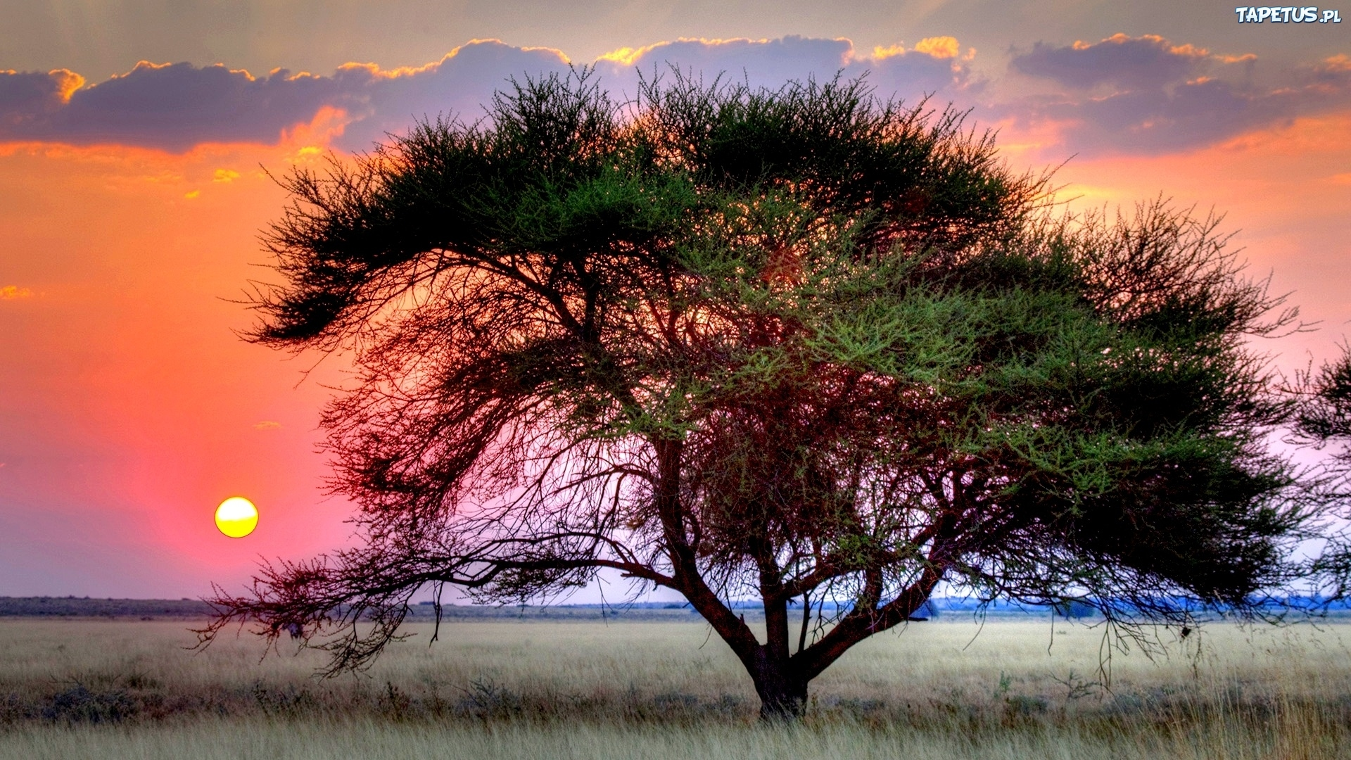 дерево в степи без регистрации