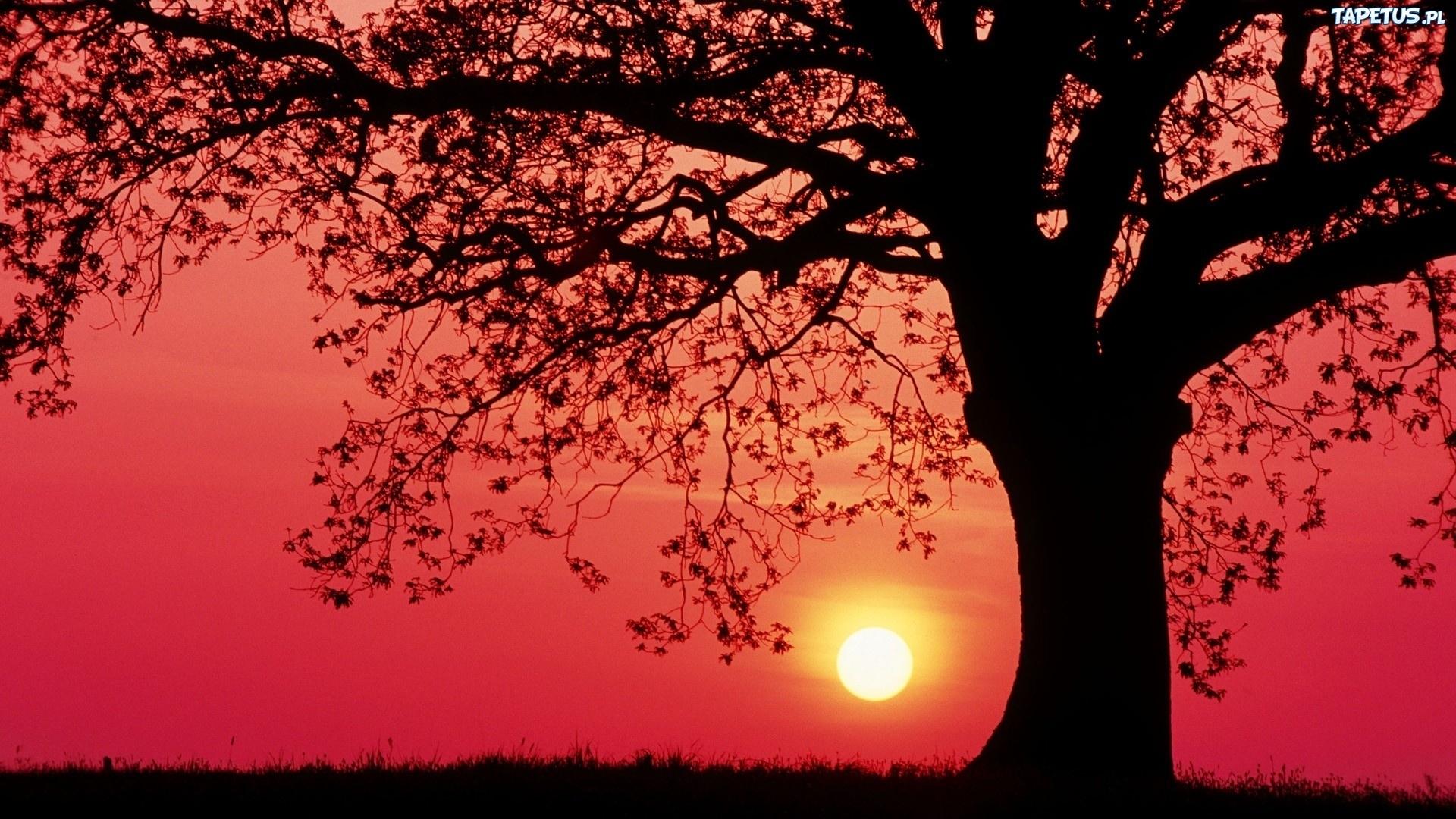 Арка из деревьев на закате на телефон