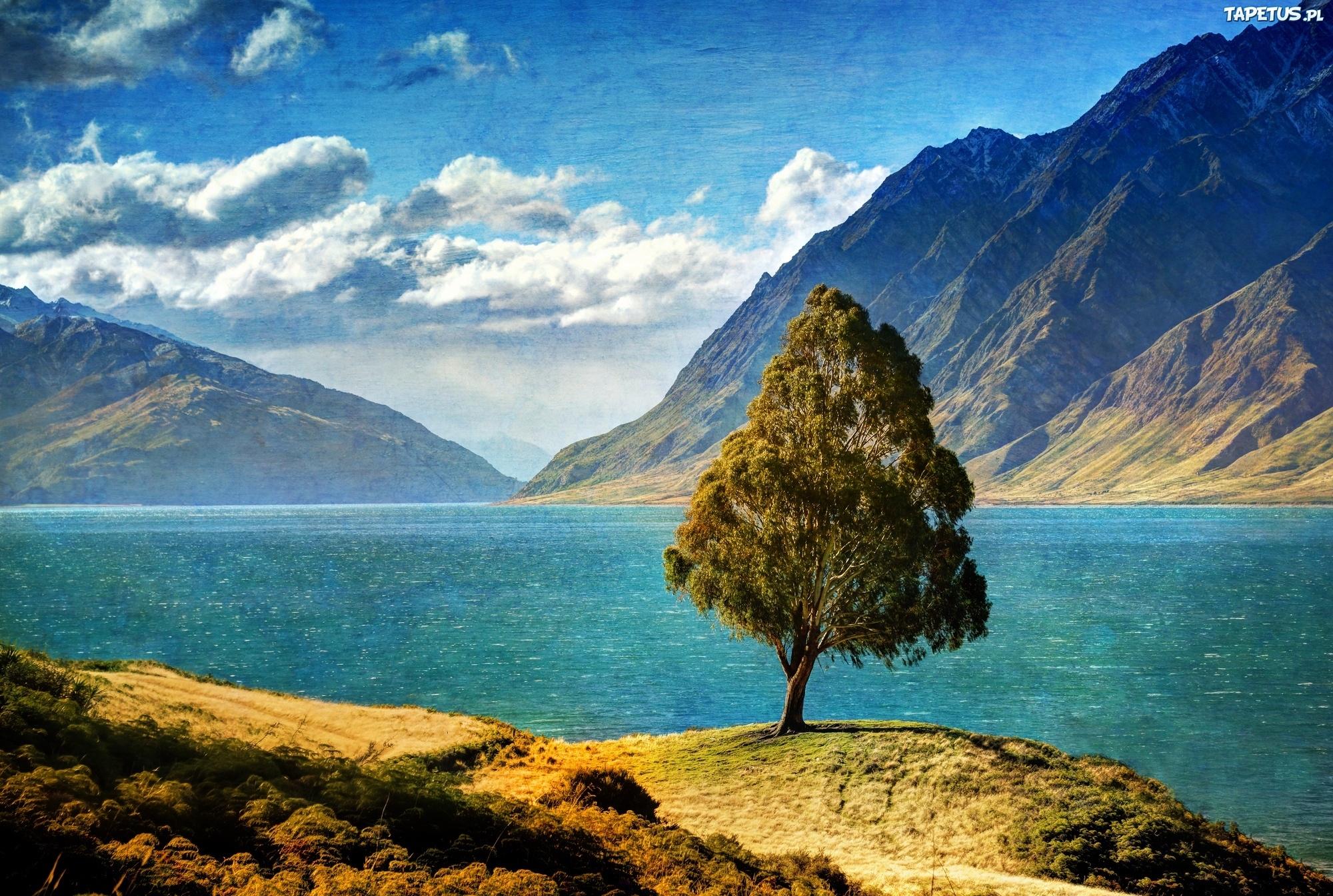 горы озеро деревья корни mountains the lake trees roots скачать