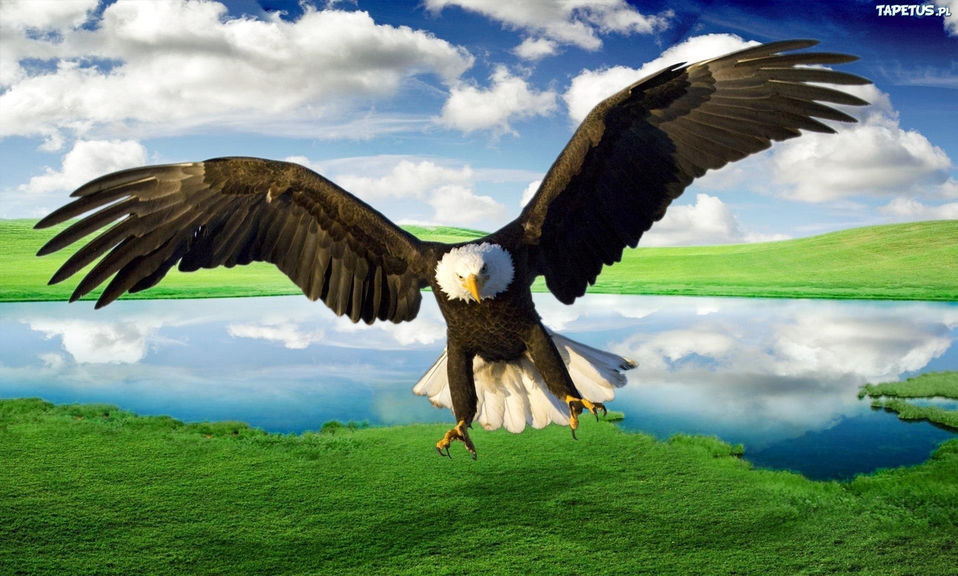 Орел над горными хребтами загрузить
