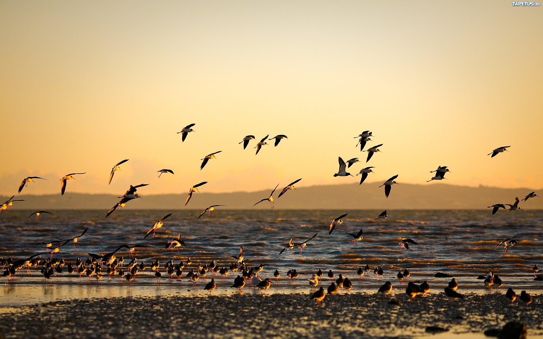 Белая птица на берегу без смс