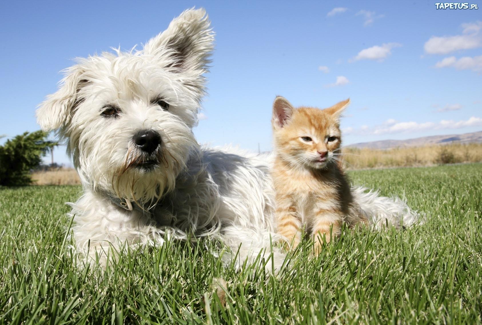 Companion care cat plan