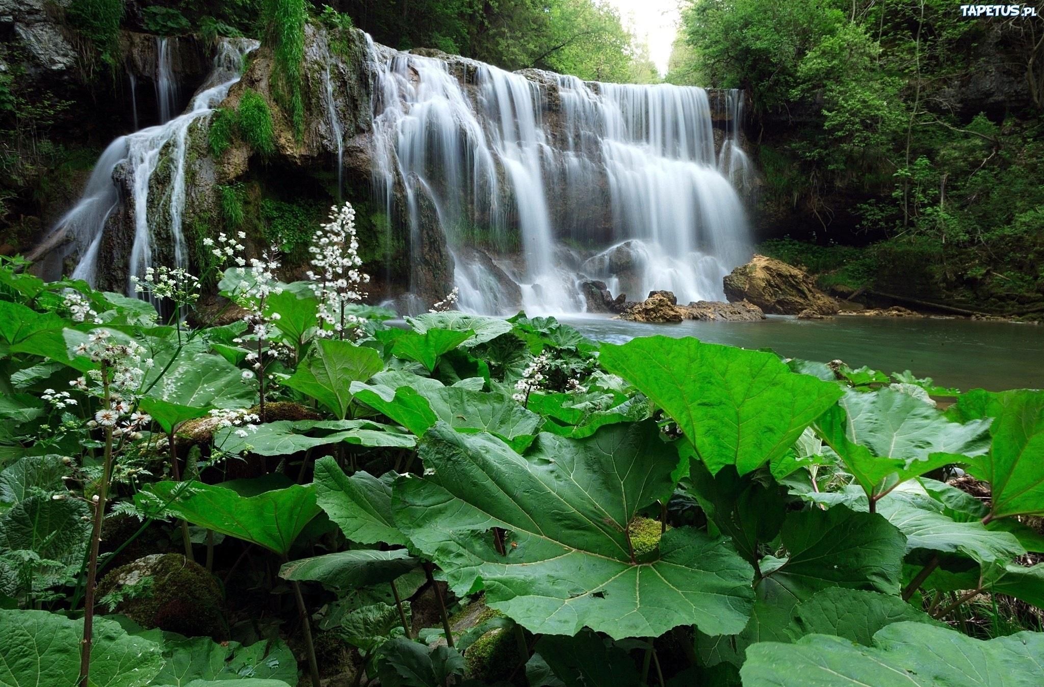 природа водопад деревья листья вода река без смс