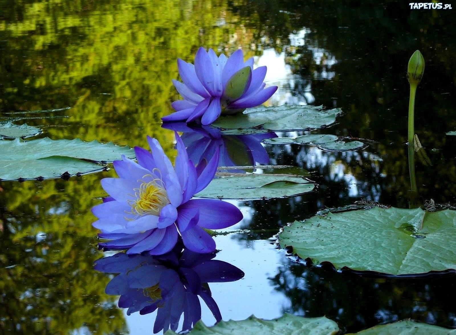 картинки в болотном цвете все гости вечера