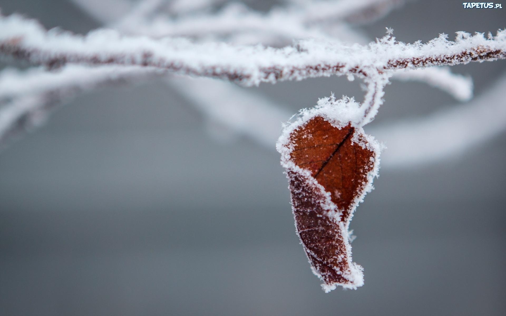 листья изморозь без смс