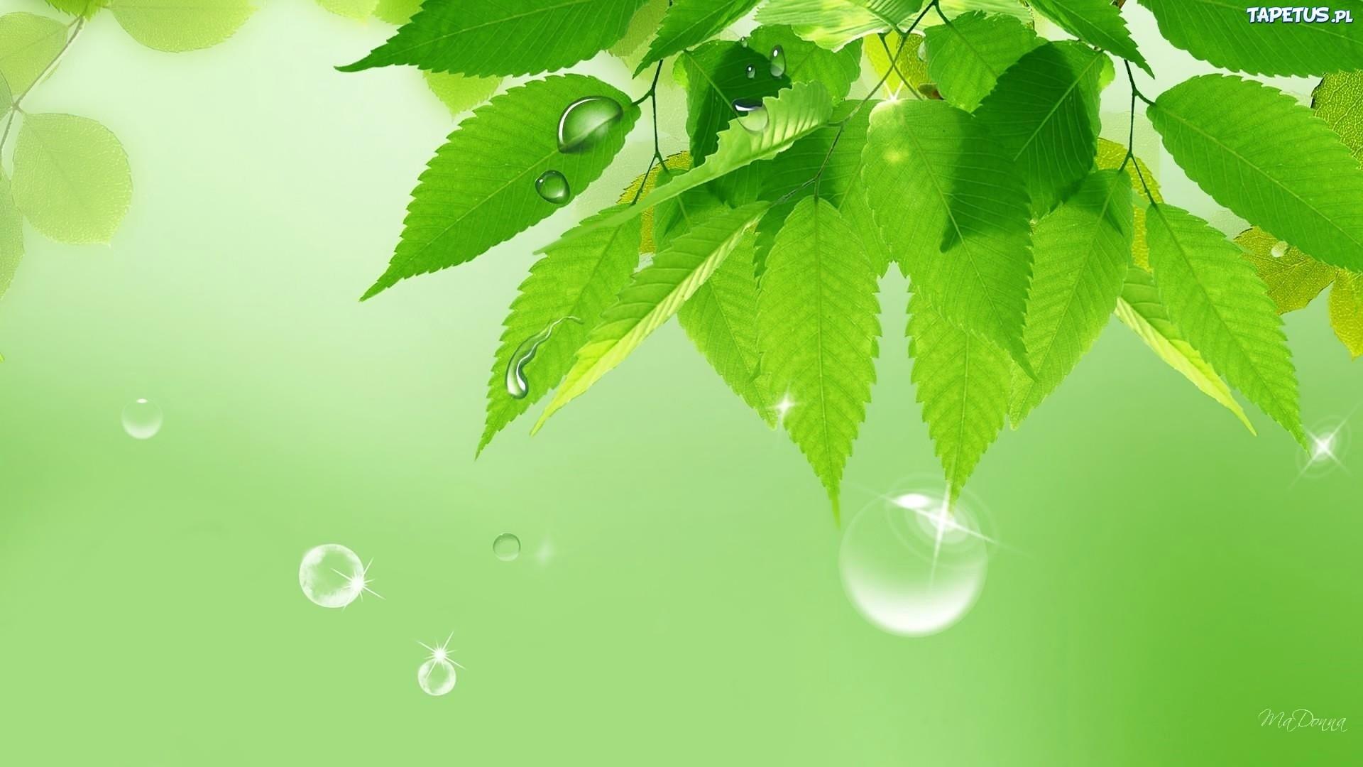 капли листки лес загрузить