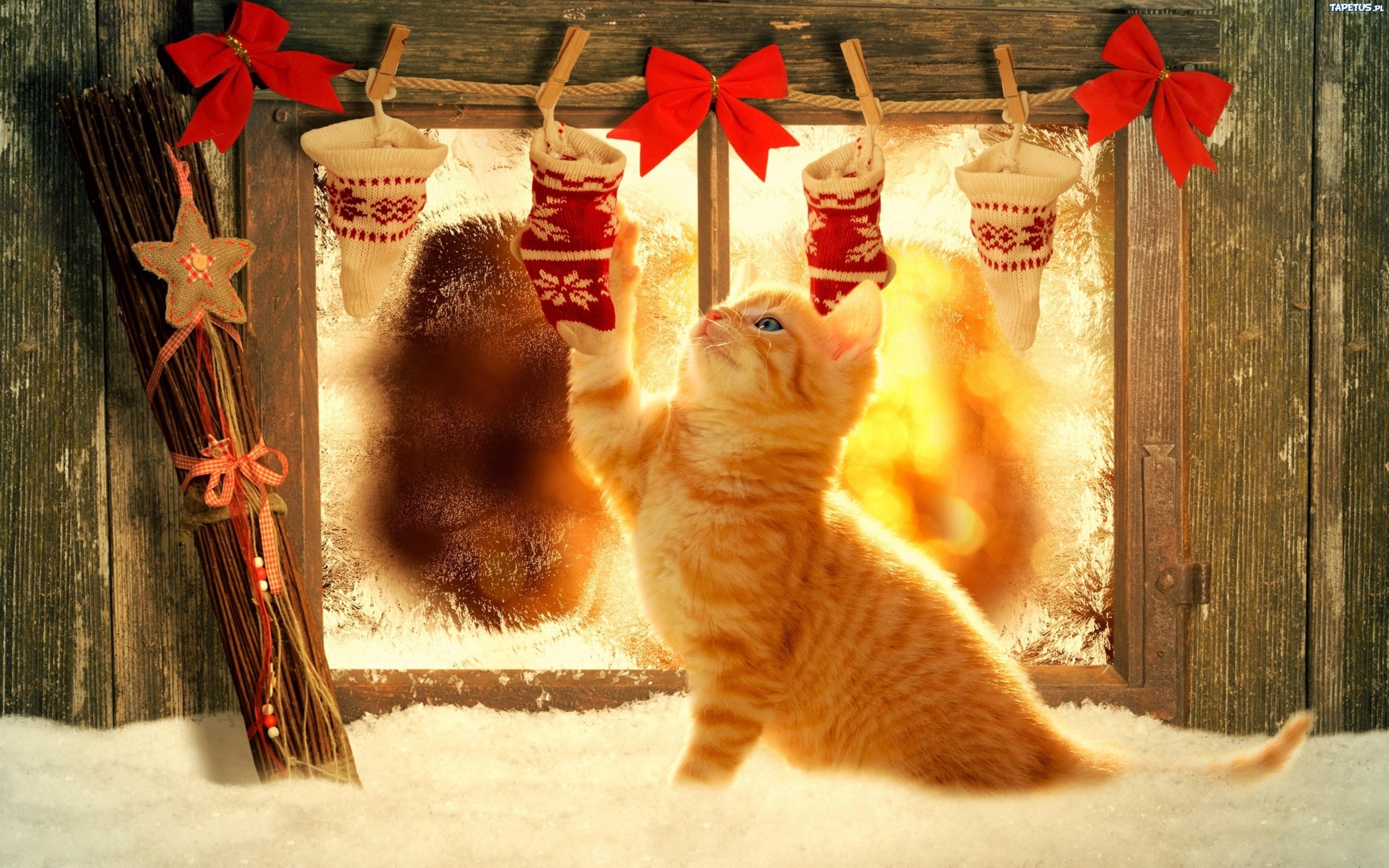 Rudy Kot świąteczne