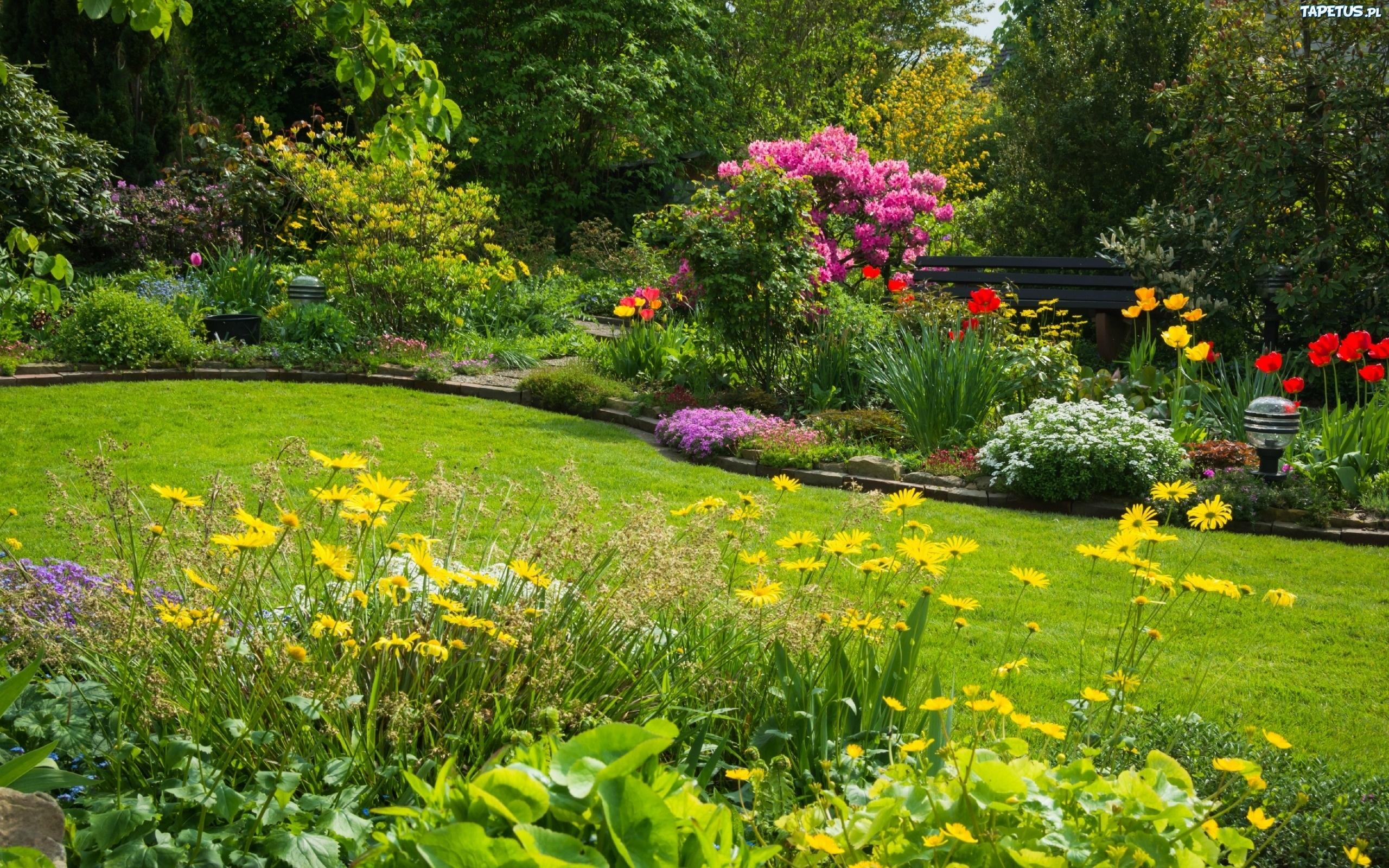 Ogród, Krzewy, Klomby, Kwiatowe, Ławka, Drzewa, Wiosna