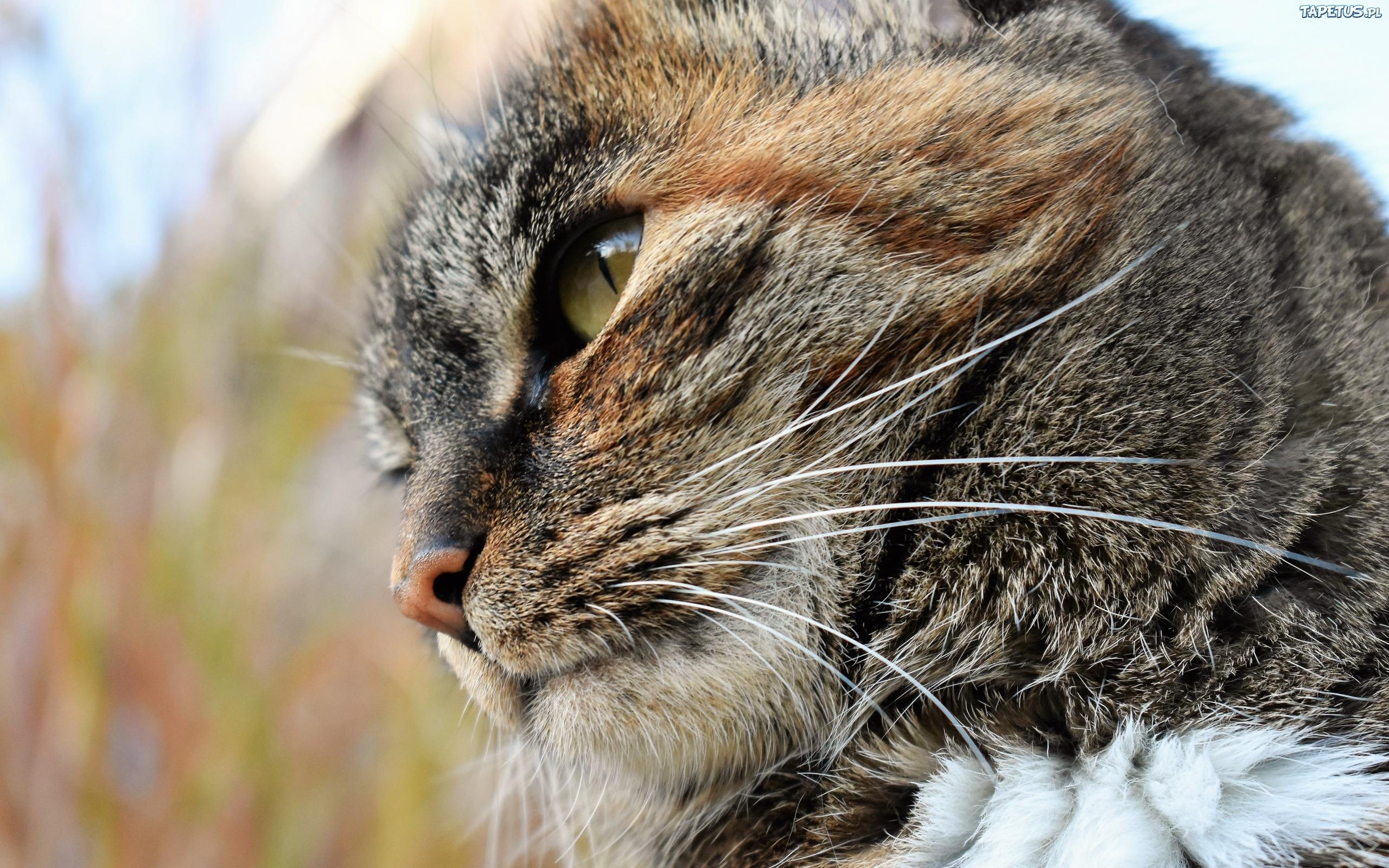 природа животные кот крупный план загрузить