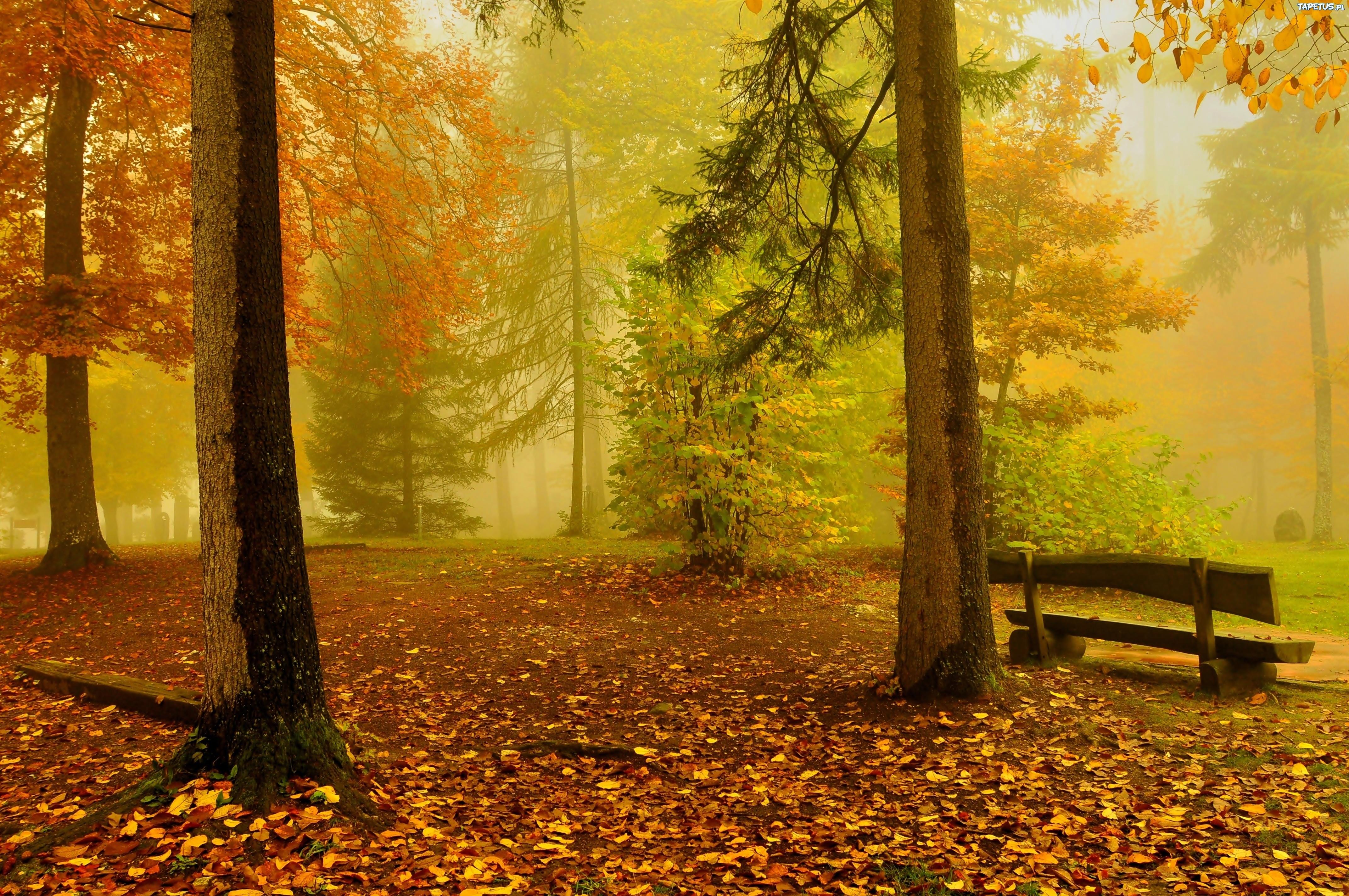 Лавочки лес деревья бесплатно