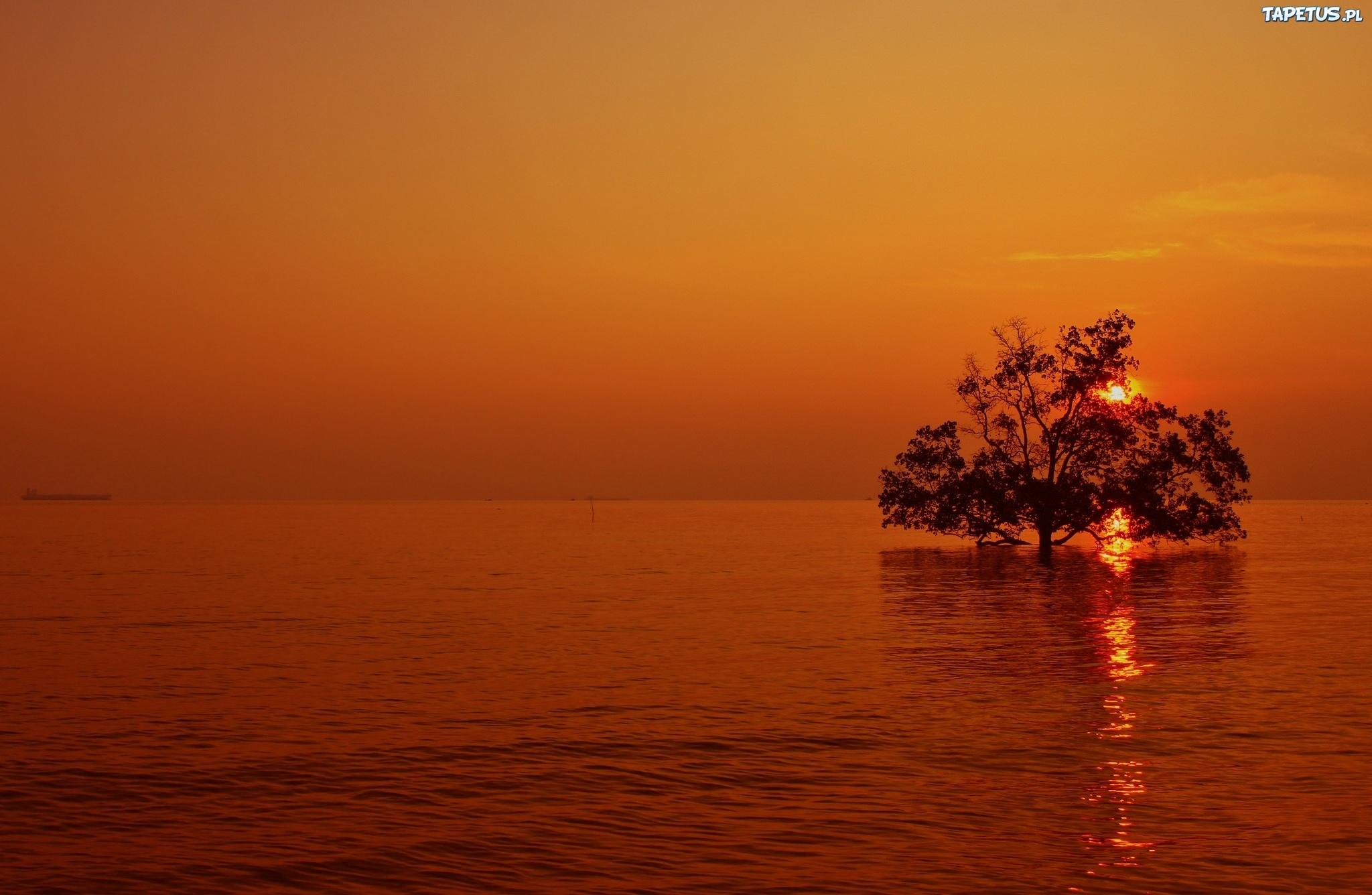 природа деревья море солнце горизонт вечер без смс