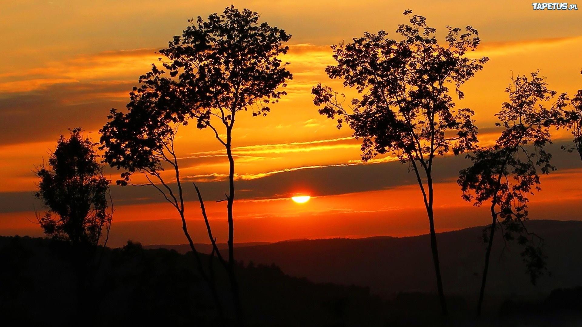 дерево солнце закат tree the sun sunset без регистрации