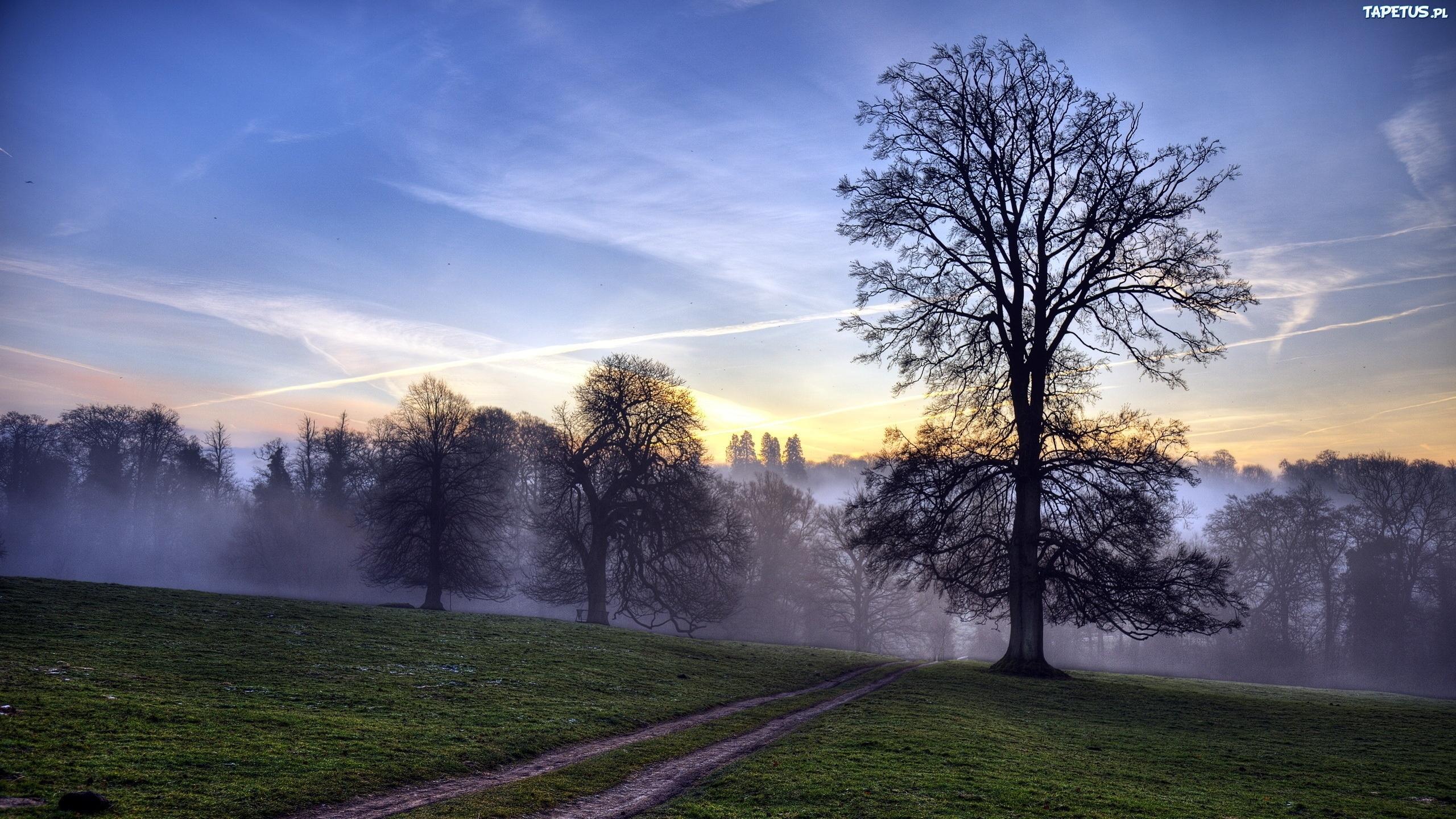 поле туман вечер бесплатно