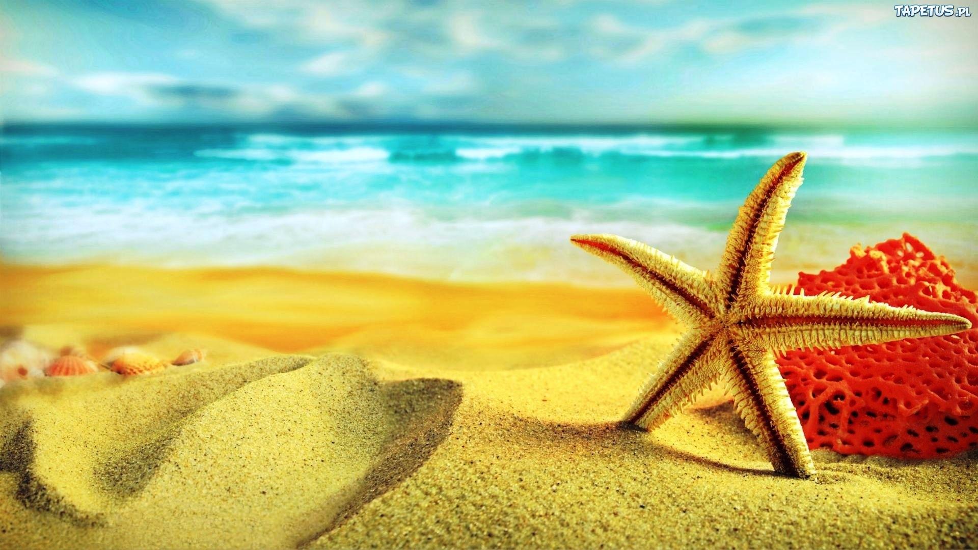 природа раковины песок пляж морская звезда nature shell sand the beach sea star без смс