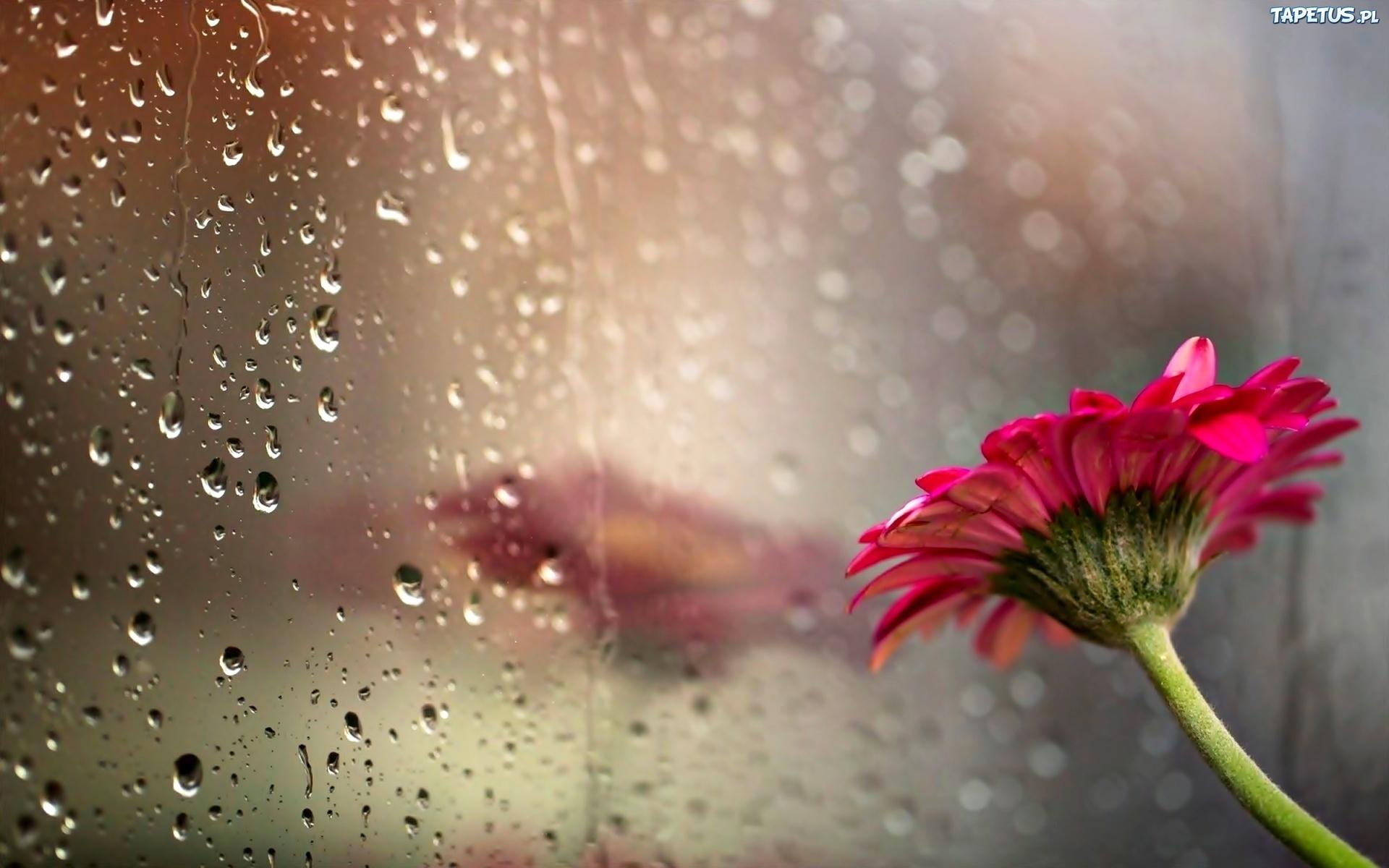 rain showers background summer - photo #6