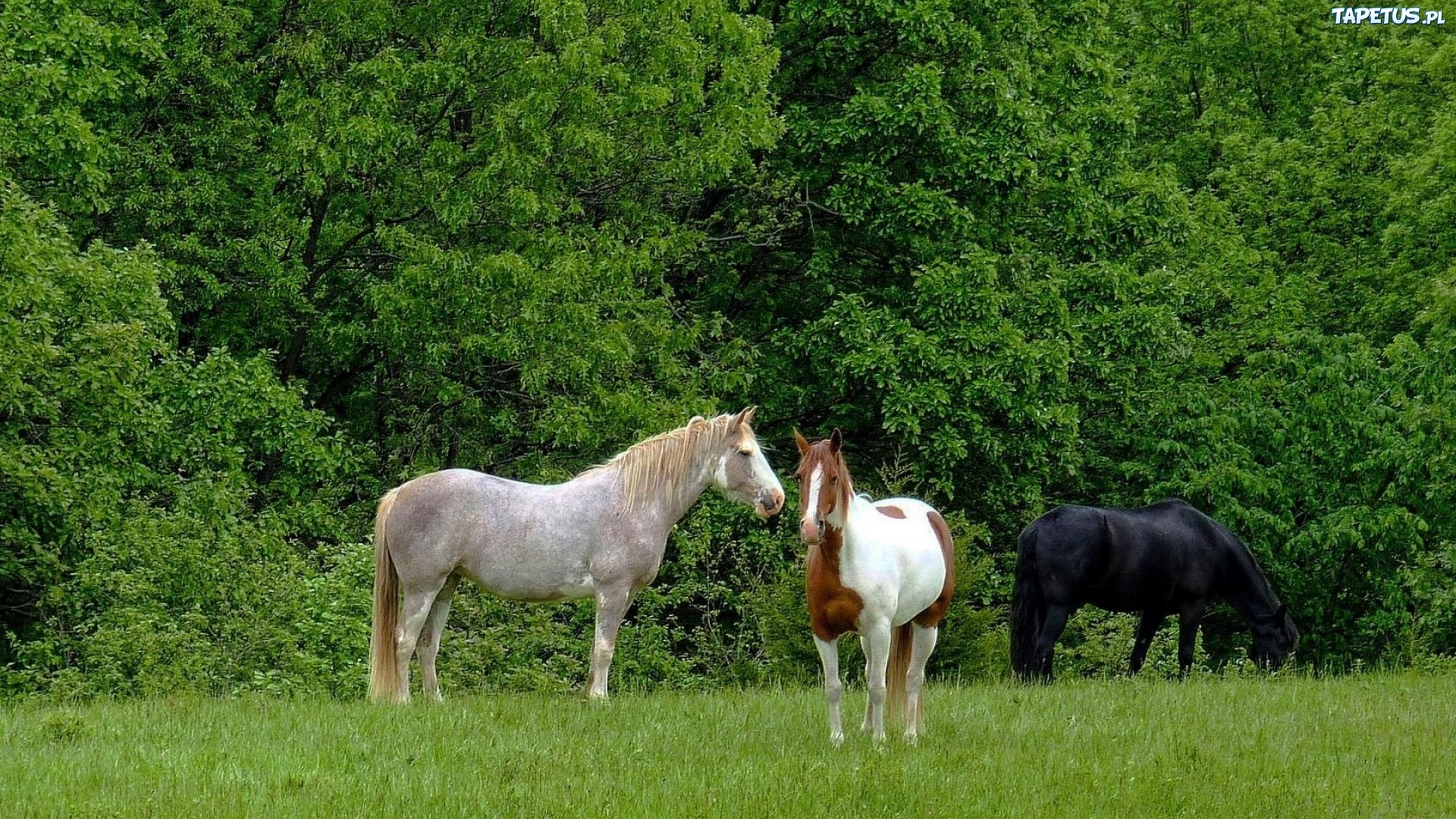 природа животные лошади овцы трава смотреть