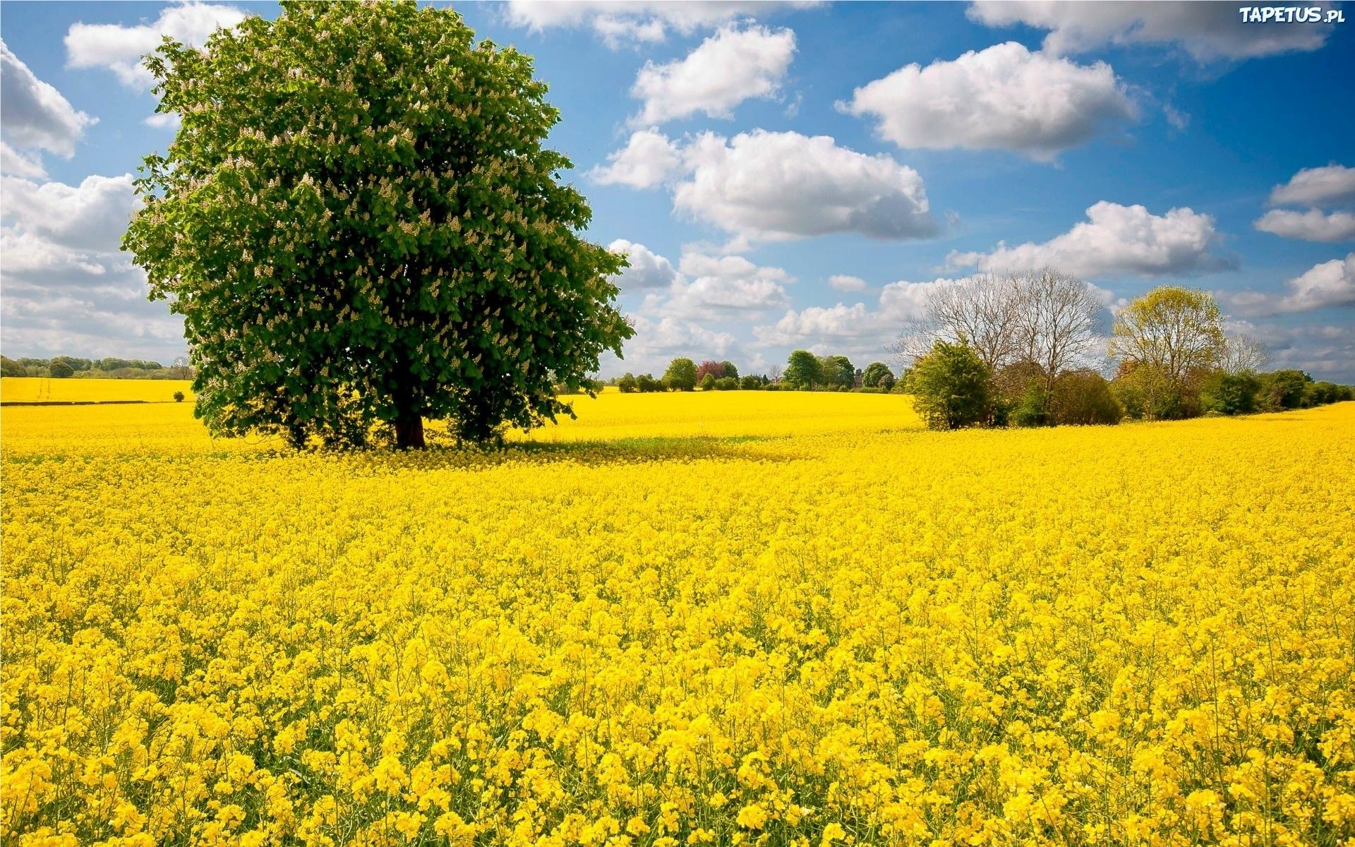 Пейзажи природы фото высокого качества