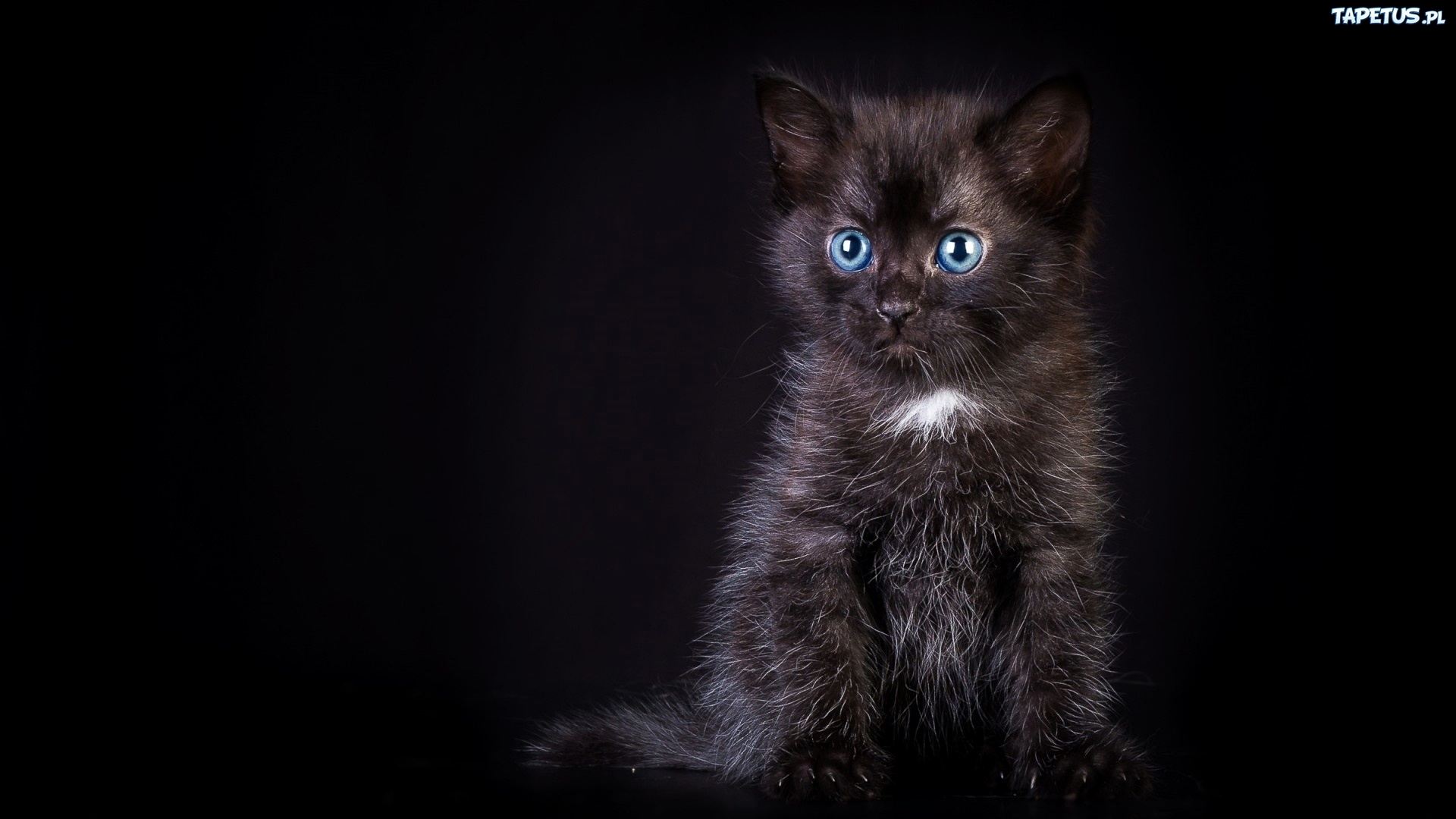 Czarny Kot Kotek Niebieskie Oczy