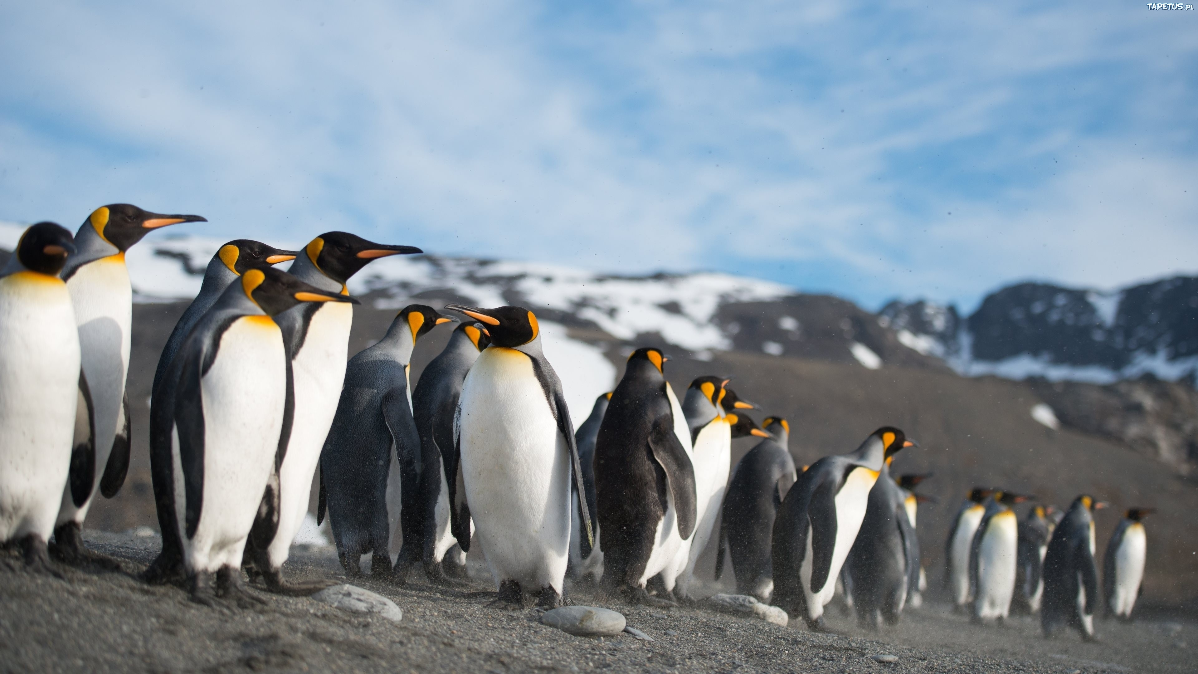 пингвин в недрах океана подборки