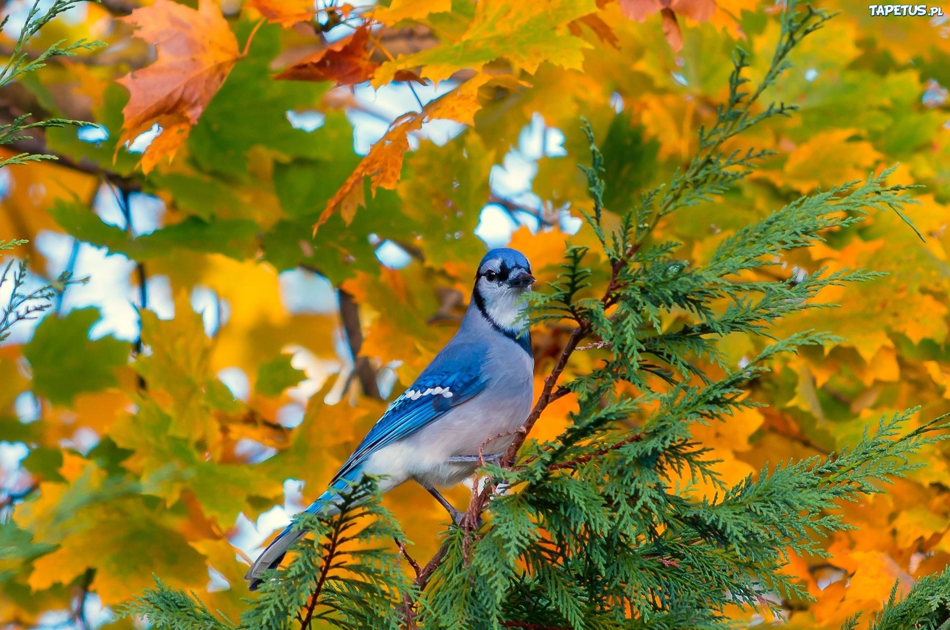 природа животные сова птицы осень листья без смс