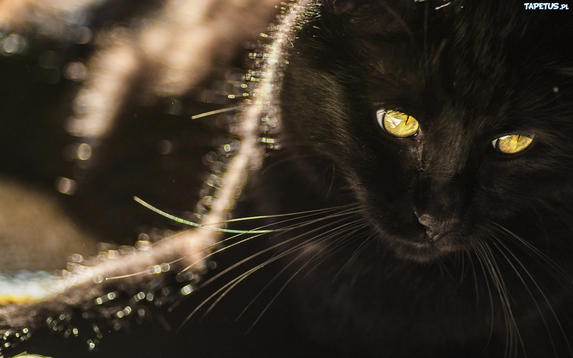 Czarny Kot żółte Oczy