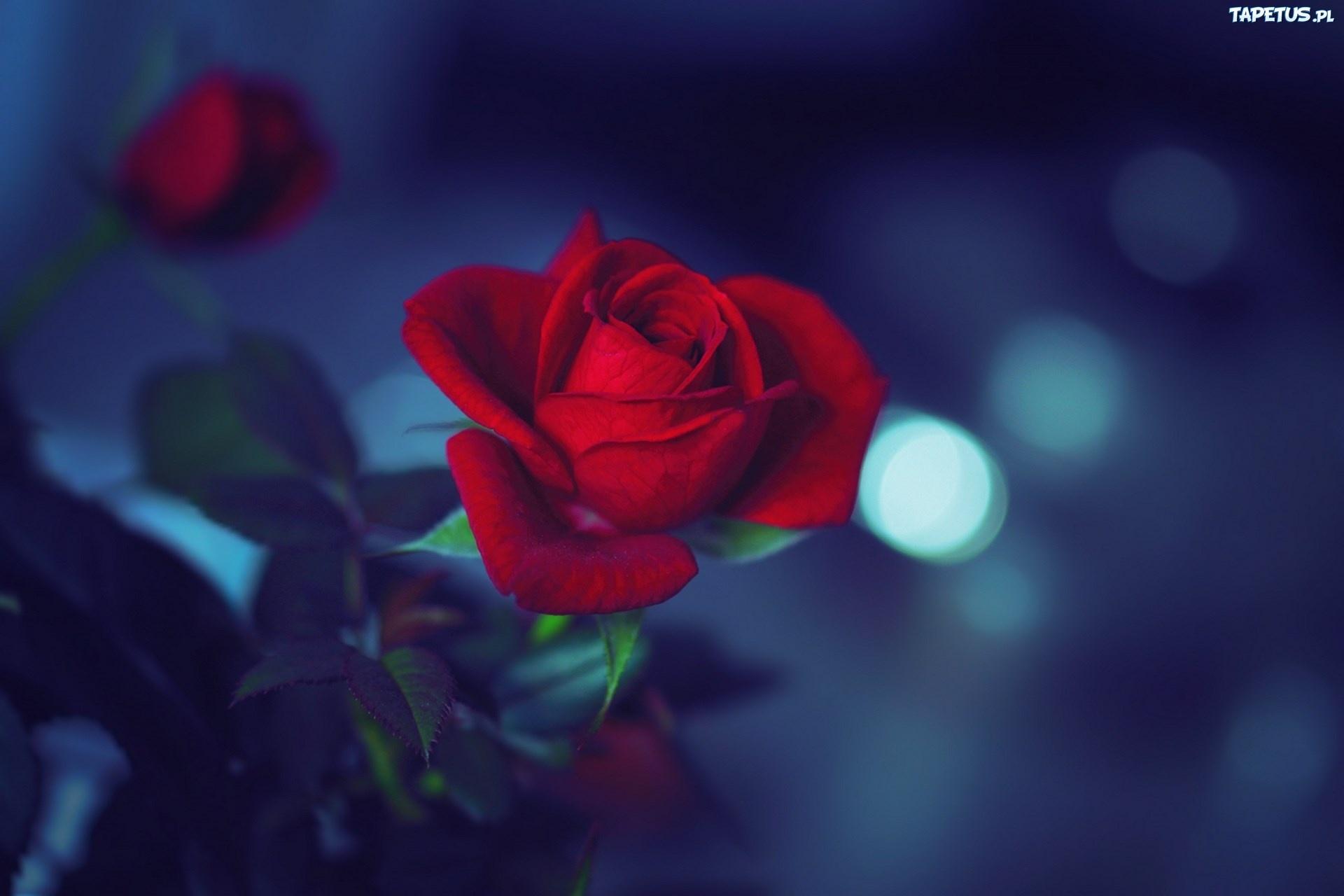 природа цветы синие красные скачать