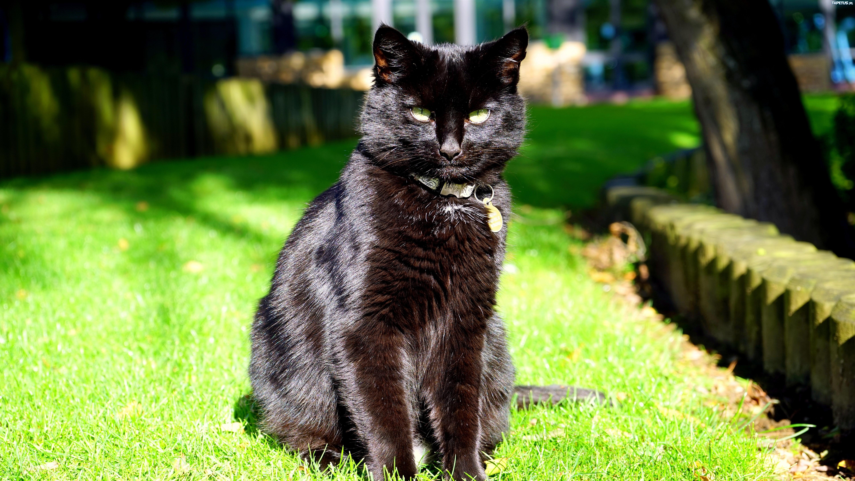 Czarny Kot Obroża