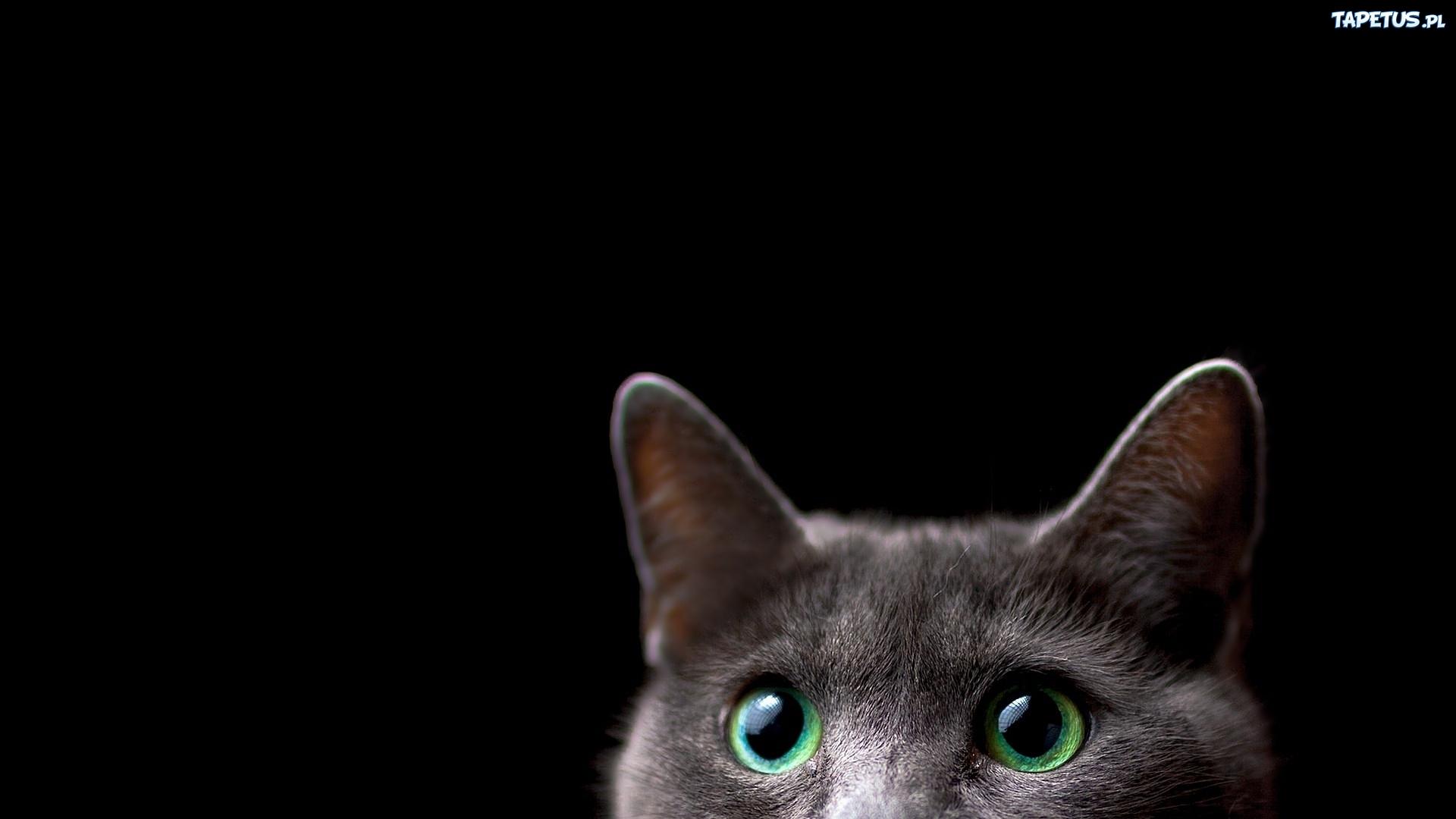 Kot Zielone Oczy Uszy