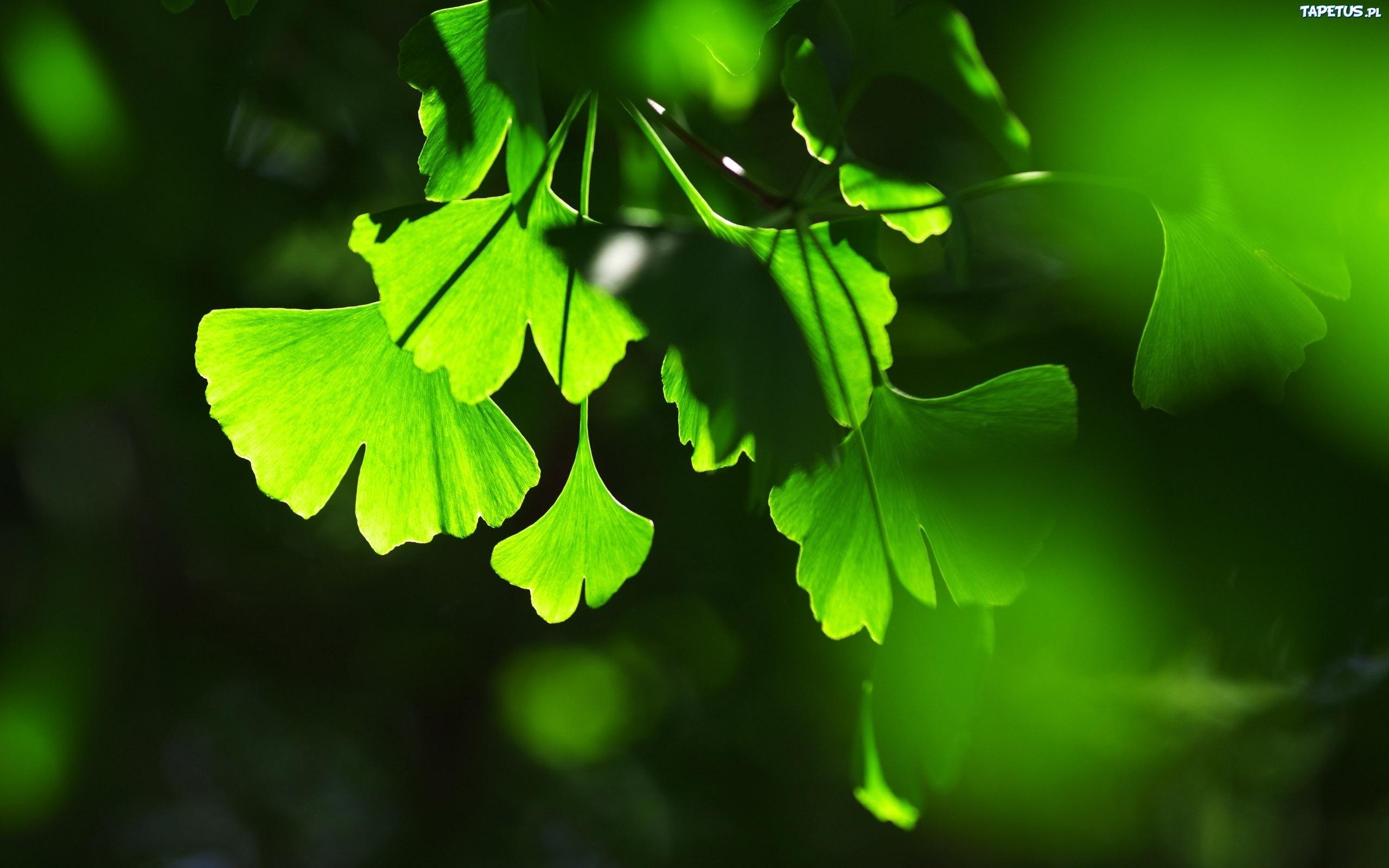 Зеленые растения в лучах солнца скачать