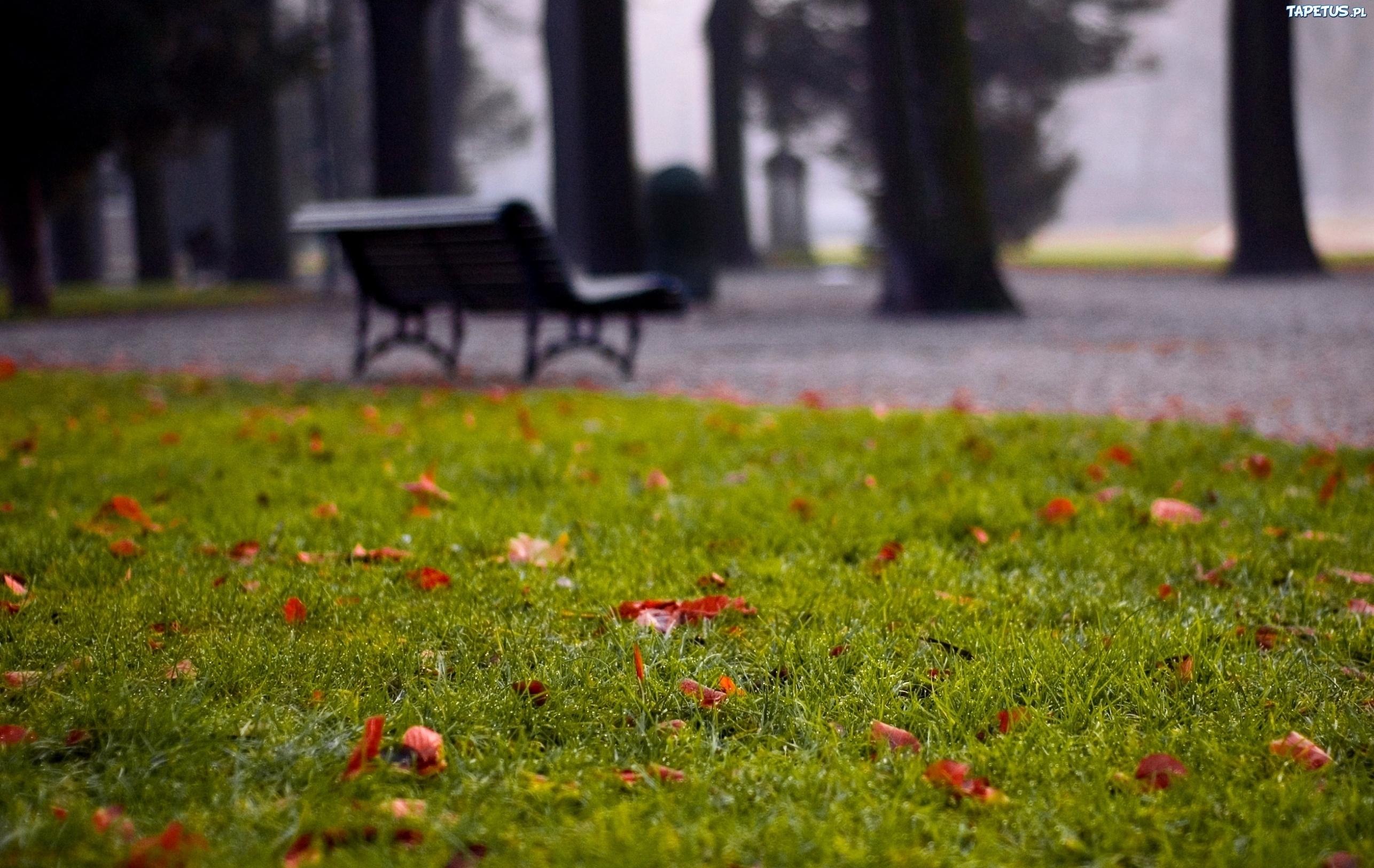 природа трава скамейка скачать